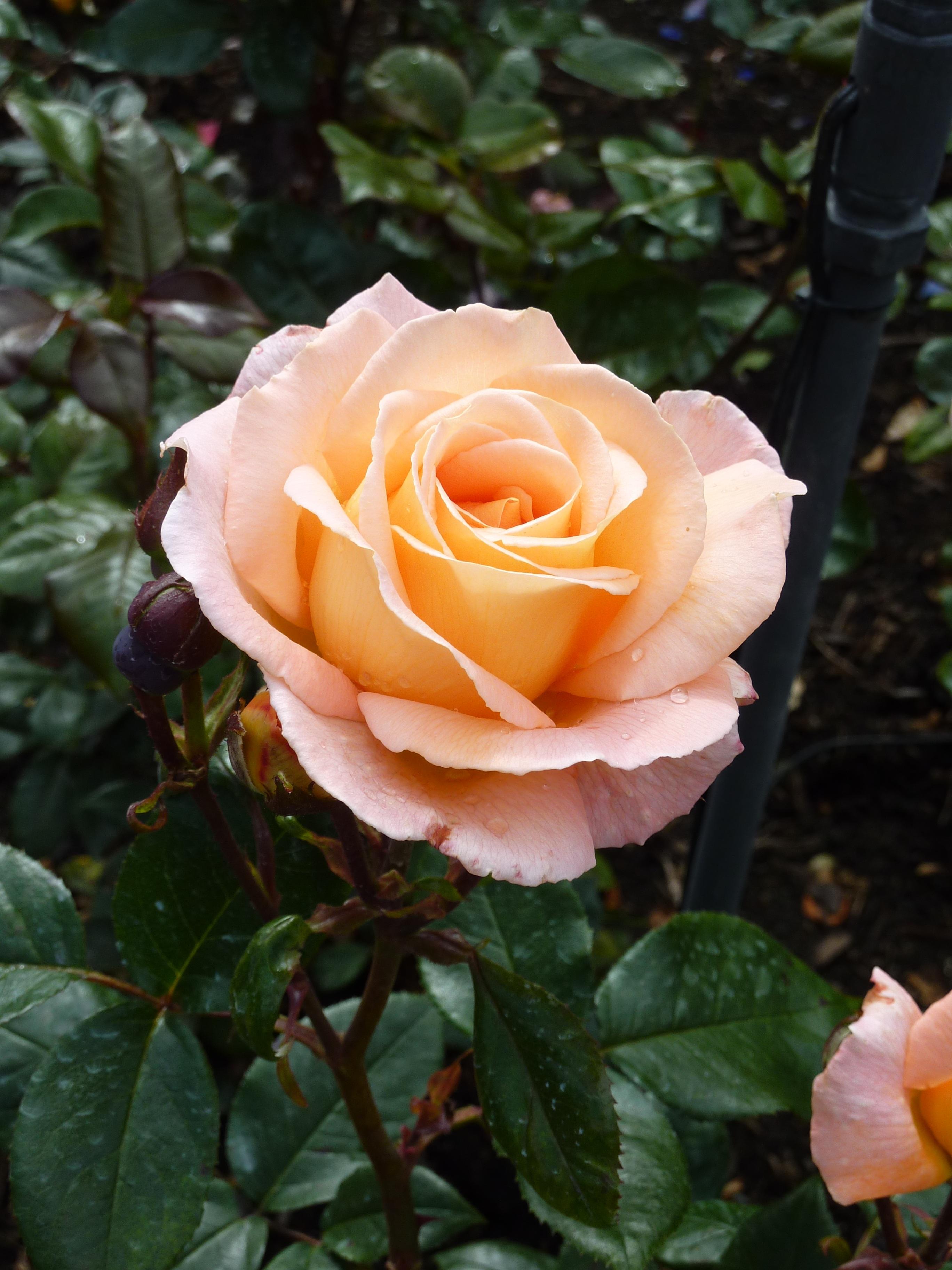 Images Gratuites Fleur Petale Floraison Fermer Flore Fleur