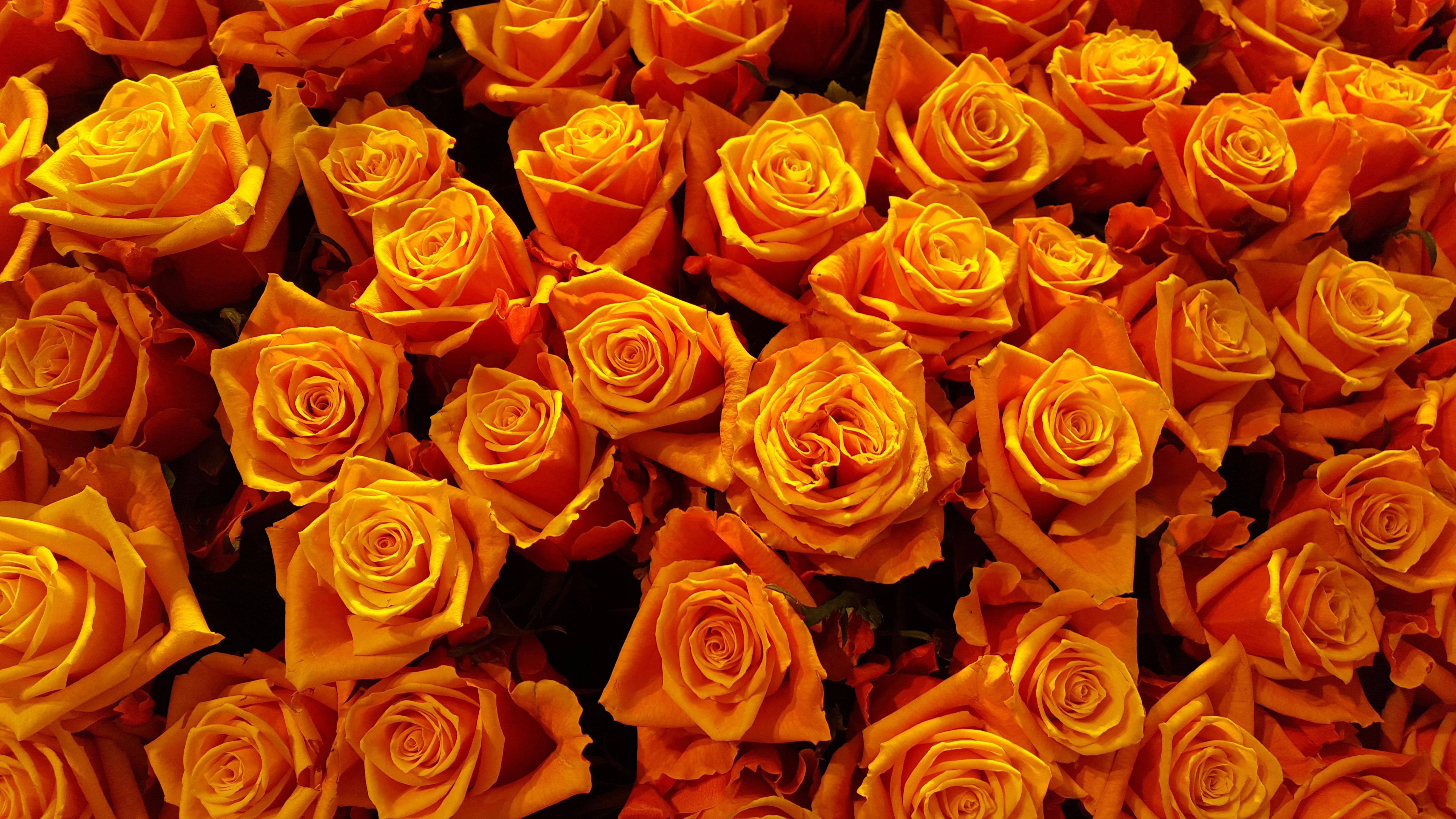 красивые картинки желто-красных роз желания