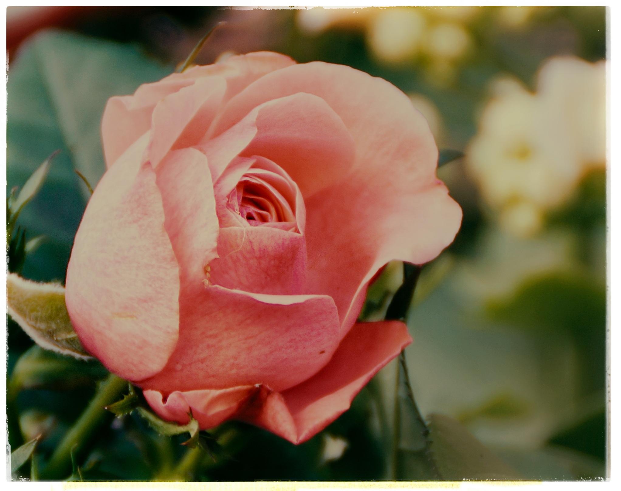 Тату роза ветров фото и значение