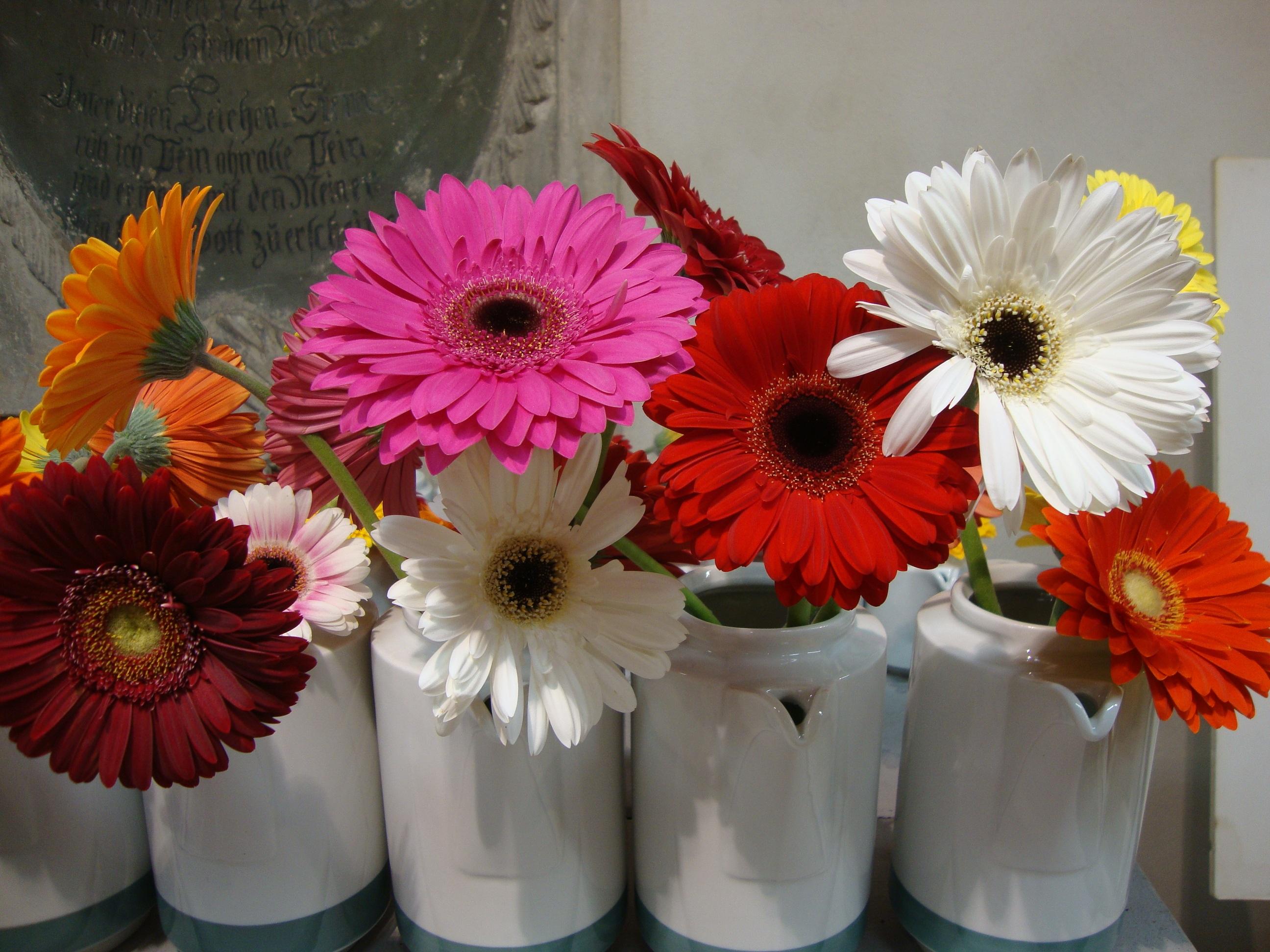картинки с цветами гербера глазурью, основным ингредиентом