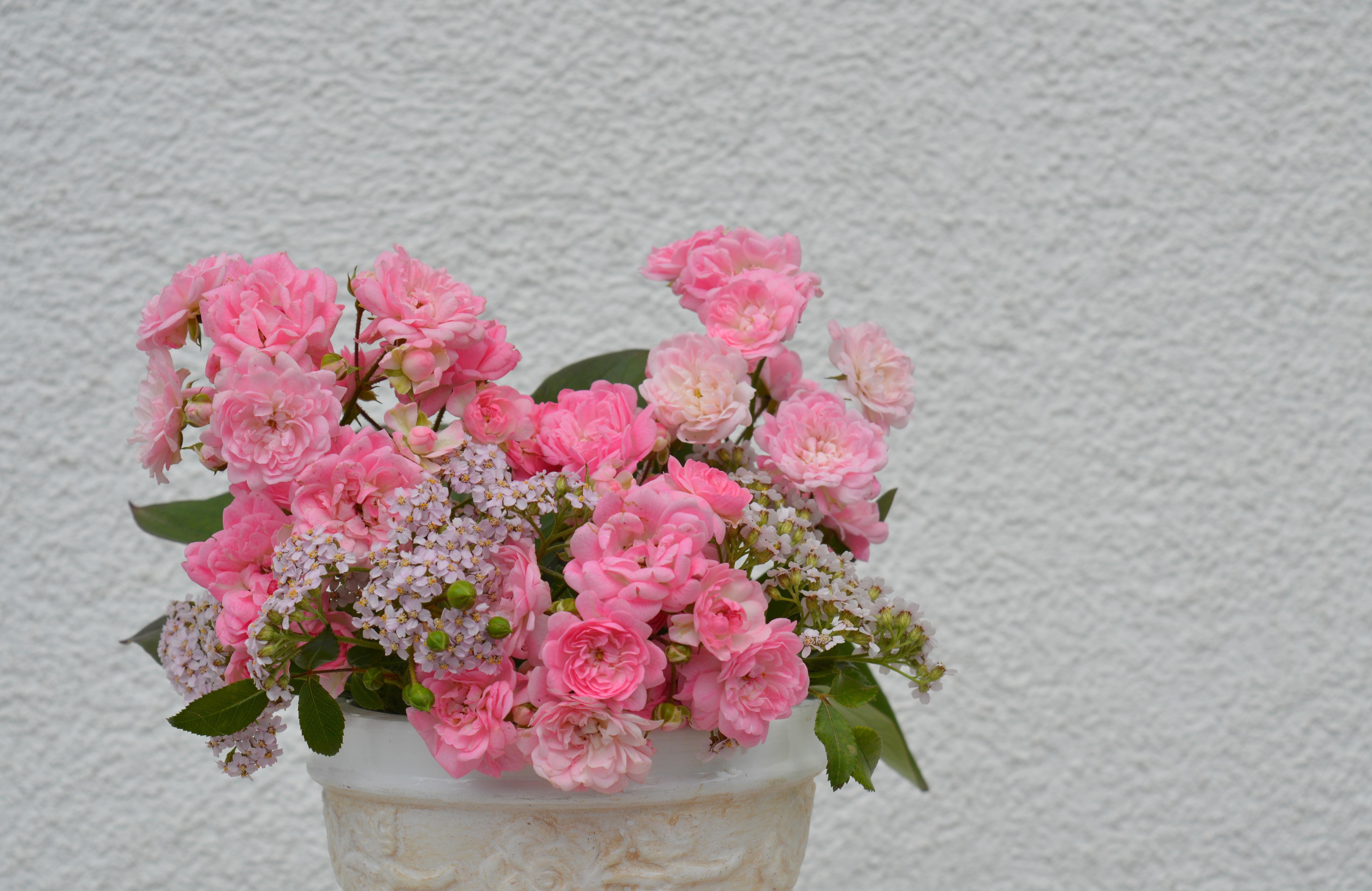 free images blossom petal romance close hydrangea beautiful
