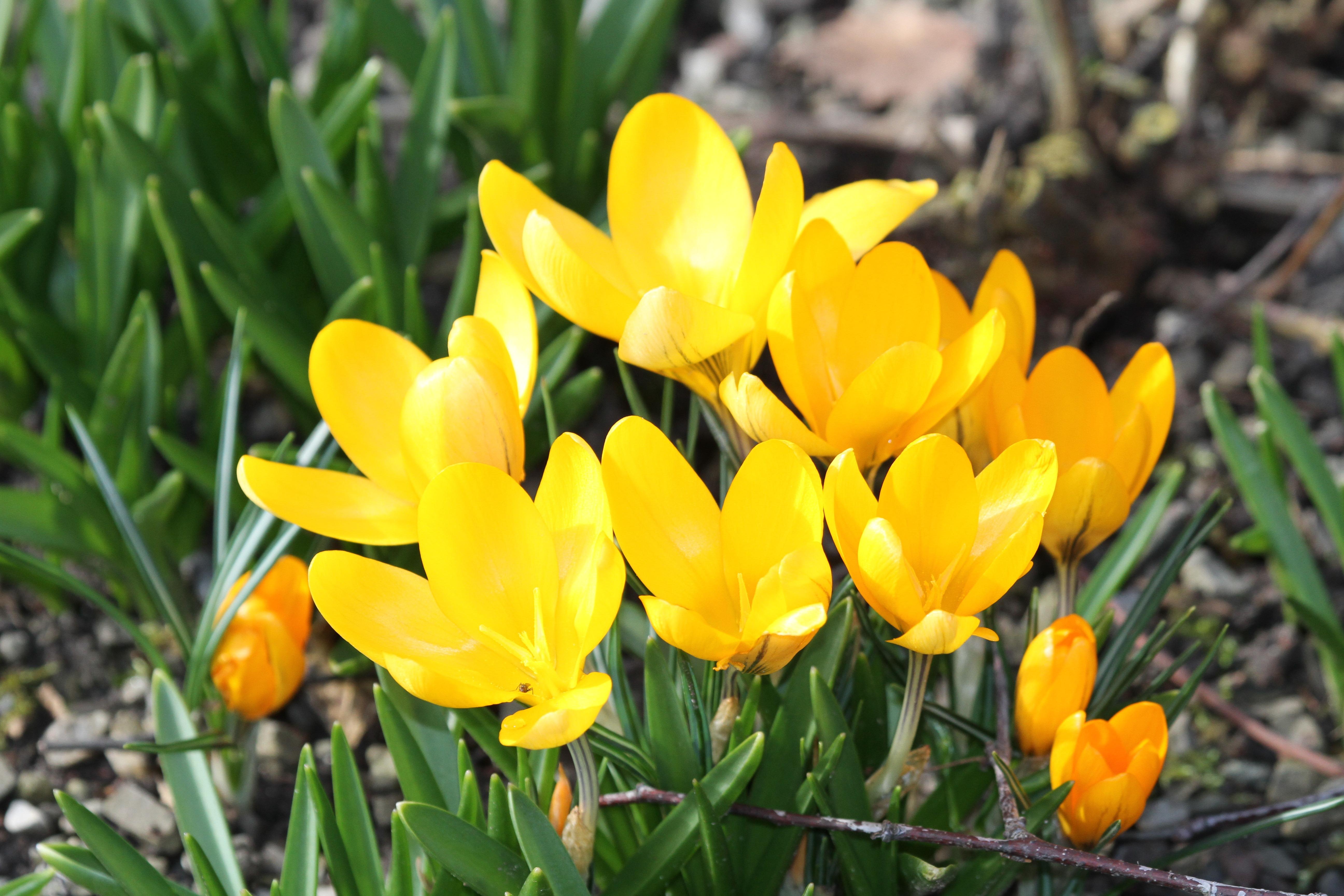 кадре расцветающее растение весной фото публикацию