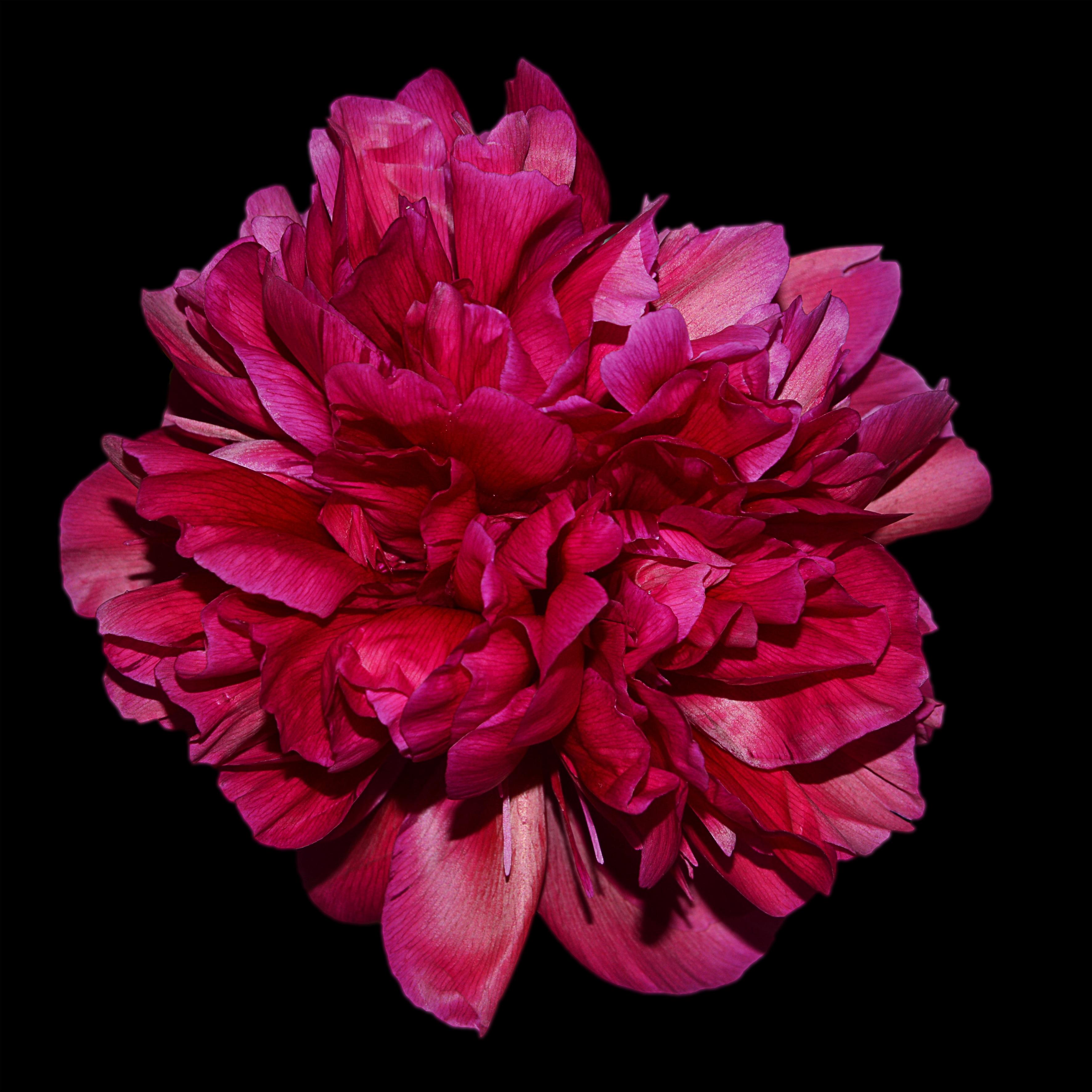 Banco de imagens flor plantar flor p tala primavera - Cortar hierba alta ...