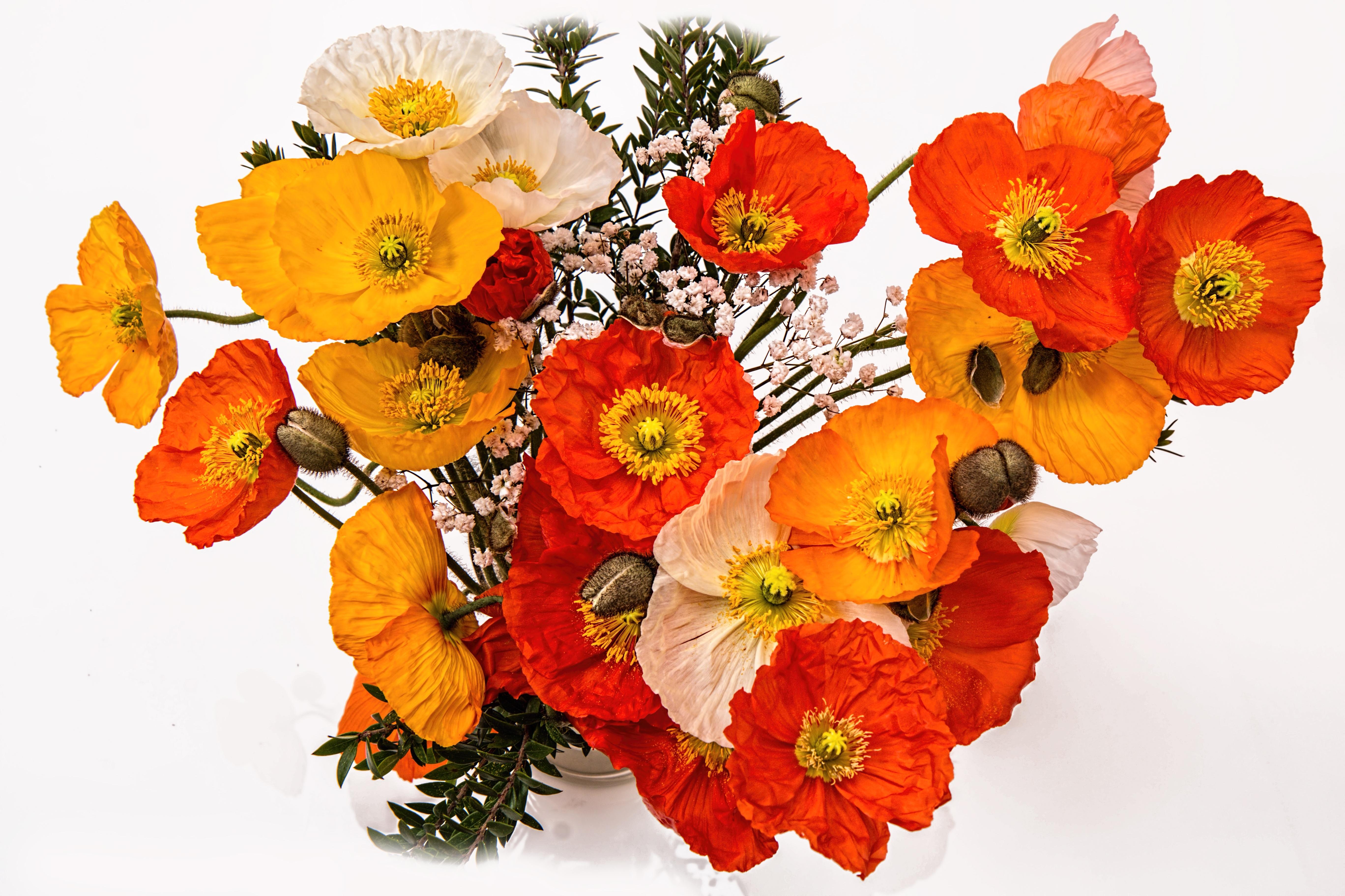 Free Images : blossom, petal, bloom, summer, vase, decoration ...