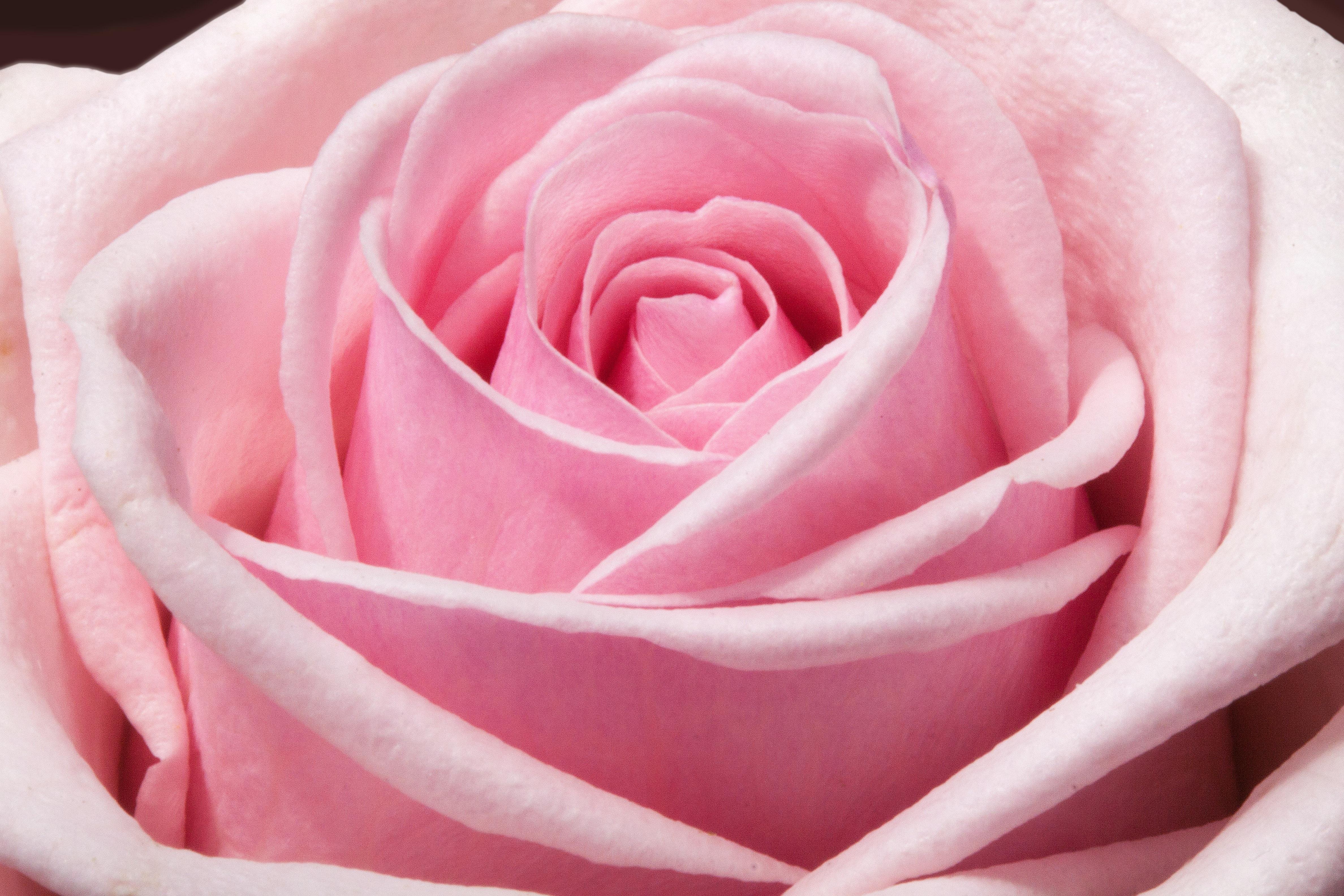 Free Images Blossom Flower Petal Bloom Summer Floral Love