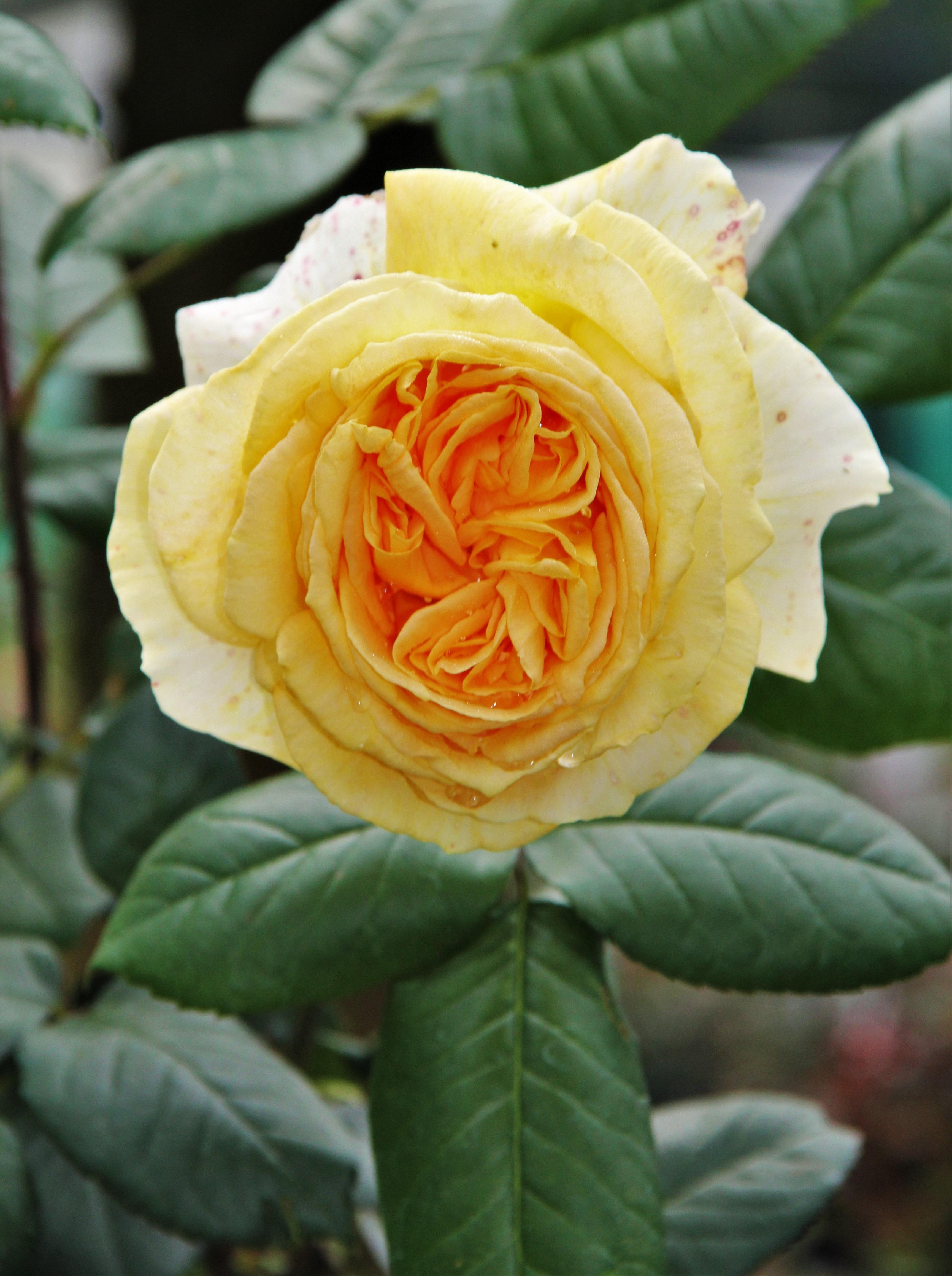 Free Images Blossom Flower Petal Summer Botany Close Flora