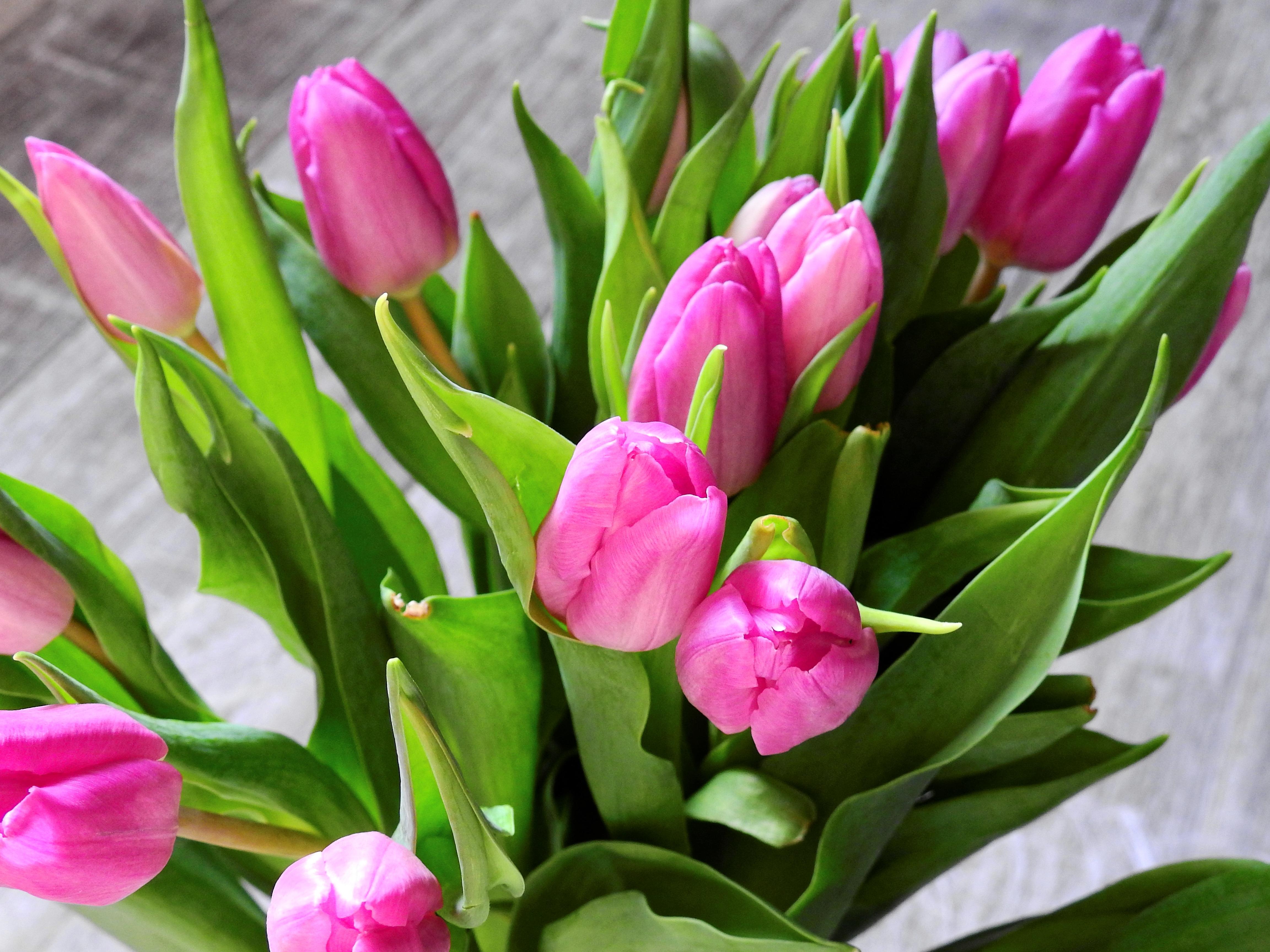 kostenlose foto bl hen blume bl tenblatt tulpe. Black Bedroom Furniture Sets. Home Design Ideas