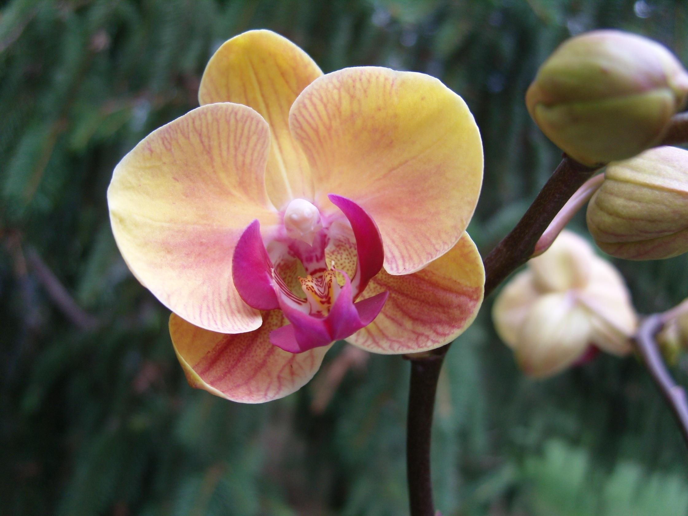 Дикие орхидеи цветы название и фото