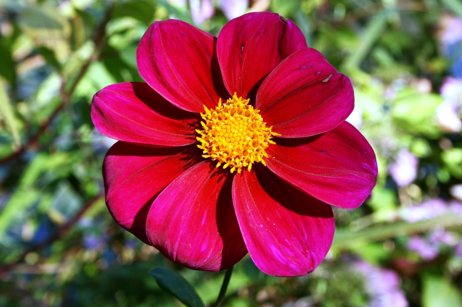 Fotos Gratis P 233 Talo Bot 225 Nica Flora Flor Silvestre