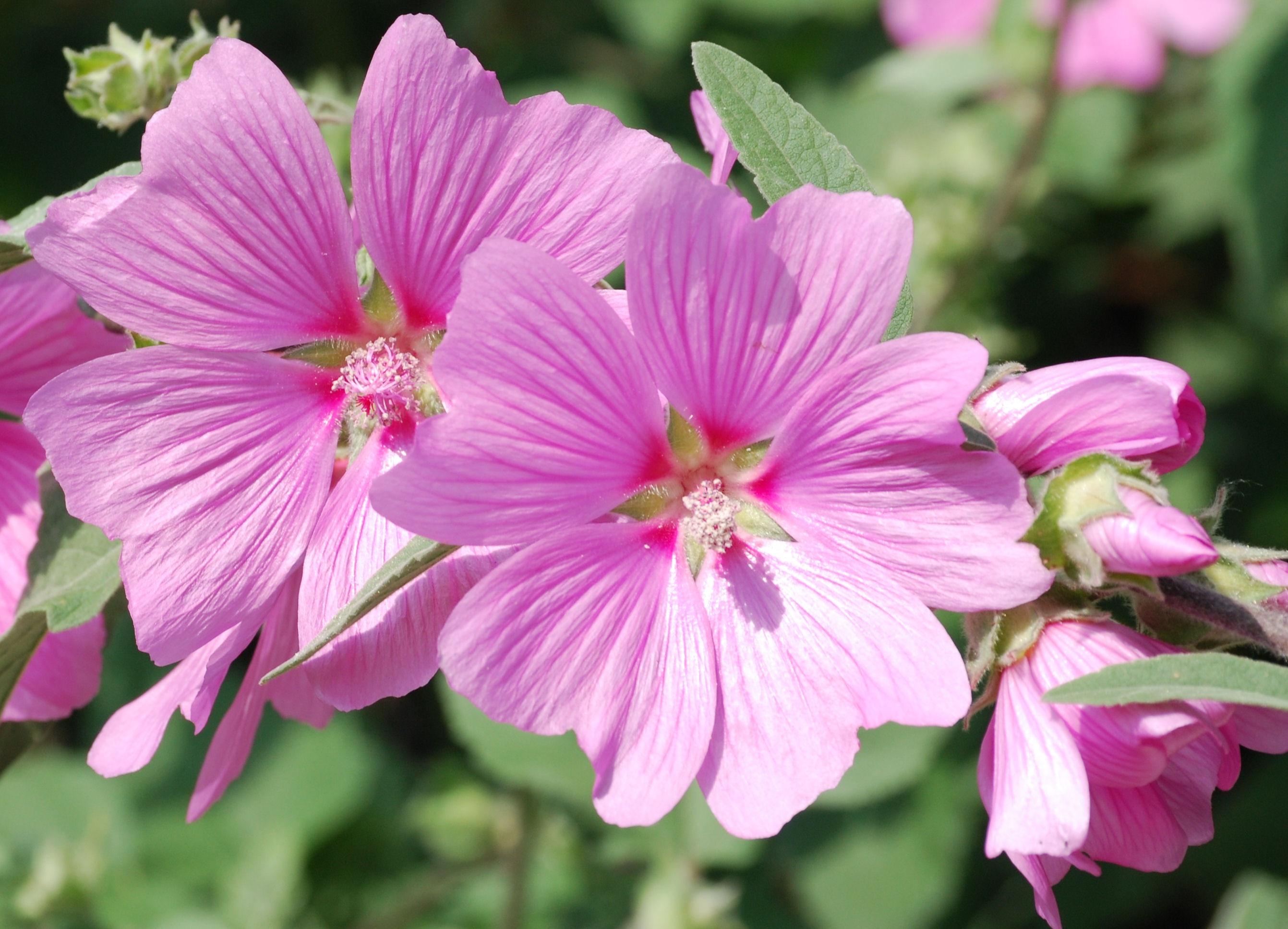 Foto di piante erbacee