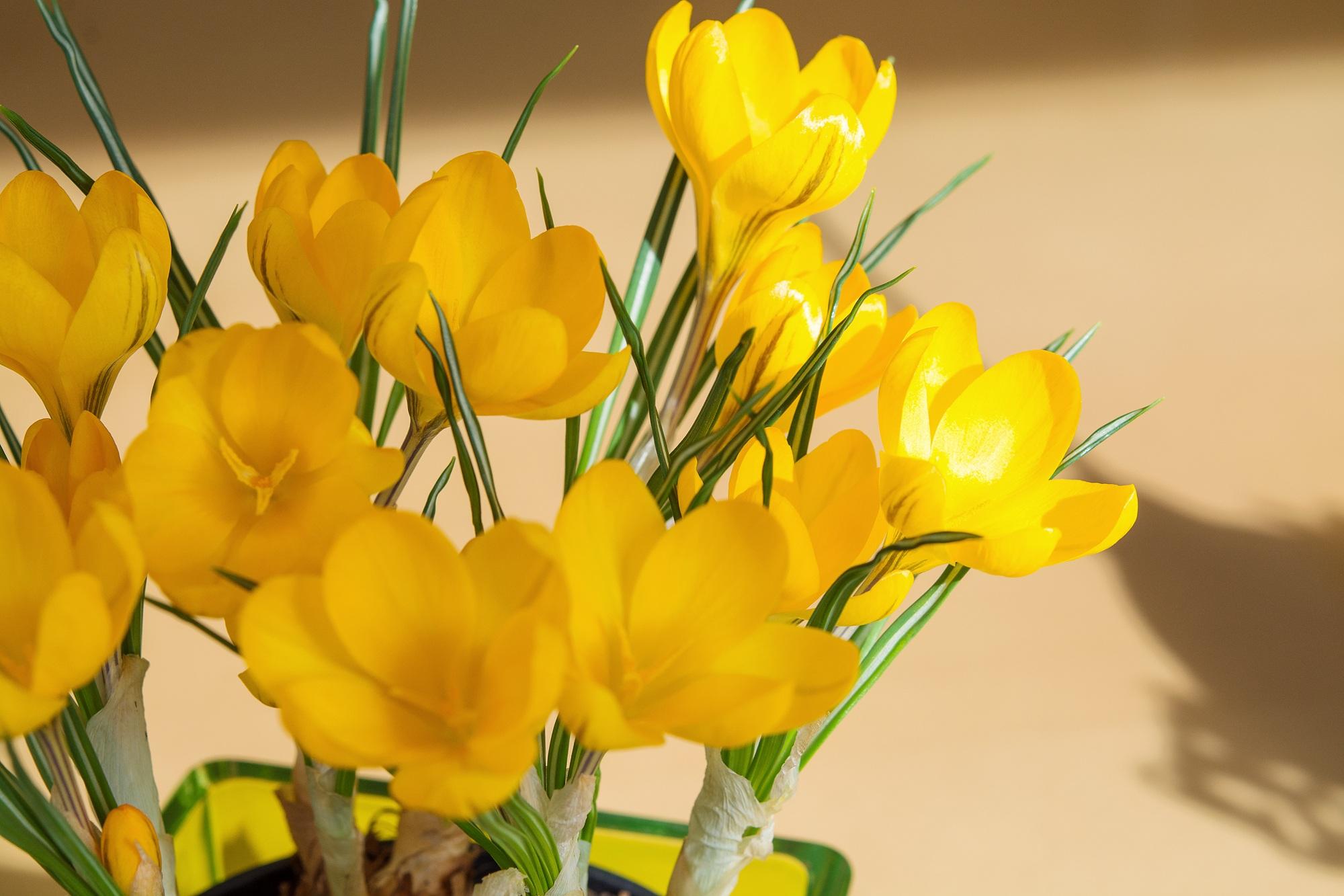 Free Images Blossom Petal Botany Close Flora Yellow Flower