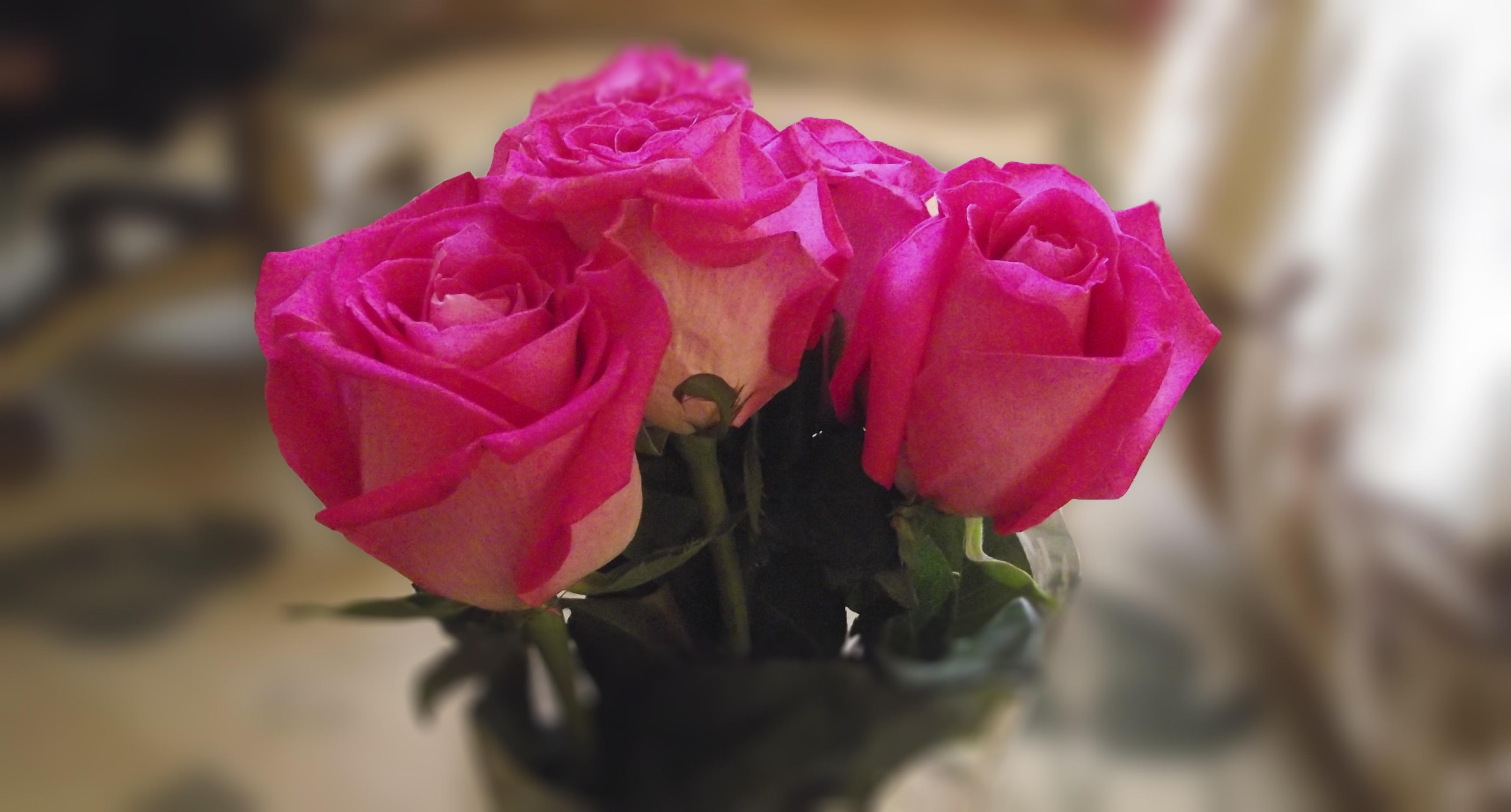 free images : blossom, flower, petal, bouquet, flora, red rose
