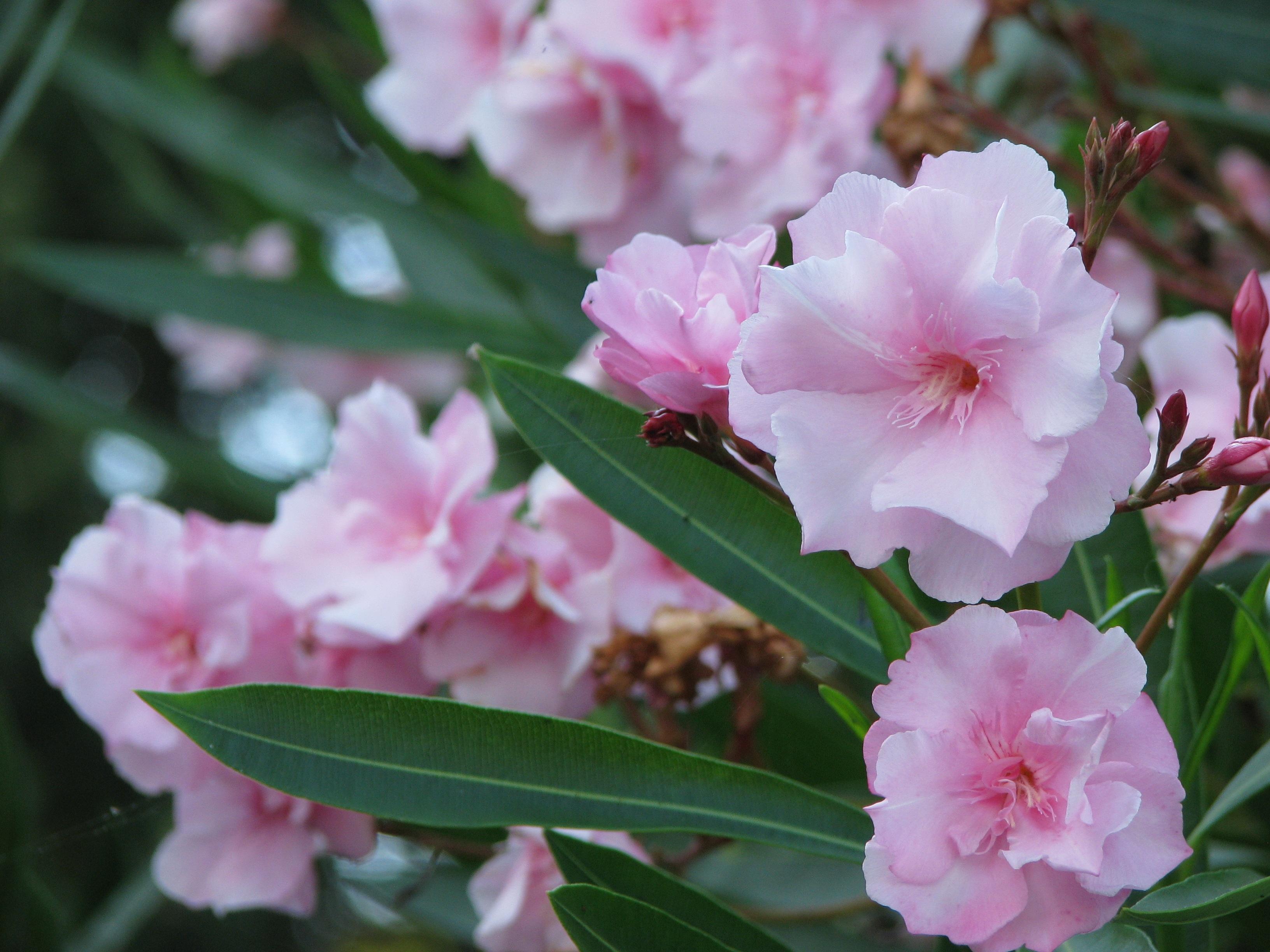 станут грамотным южные кустарники цветущие фото насекомое, которое