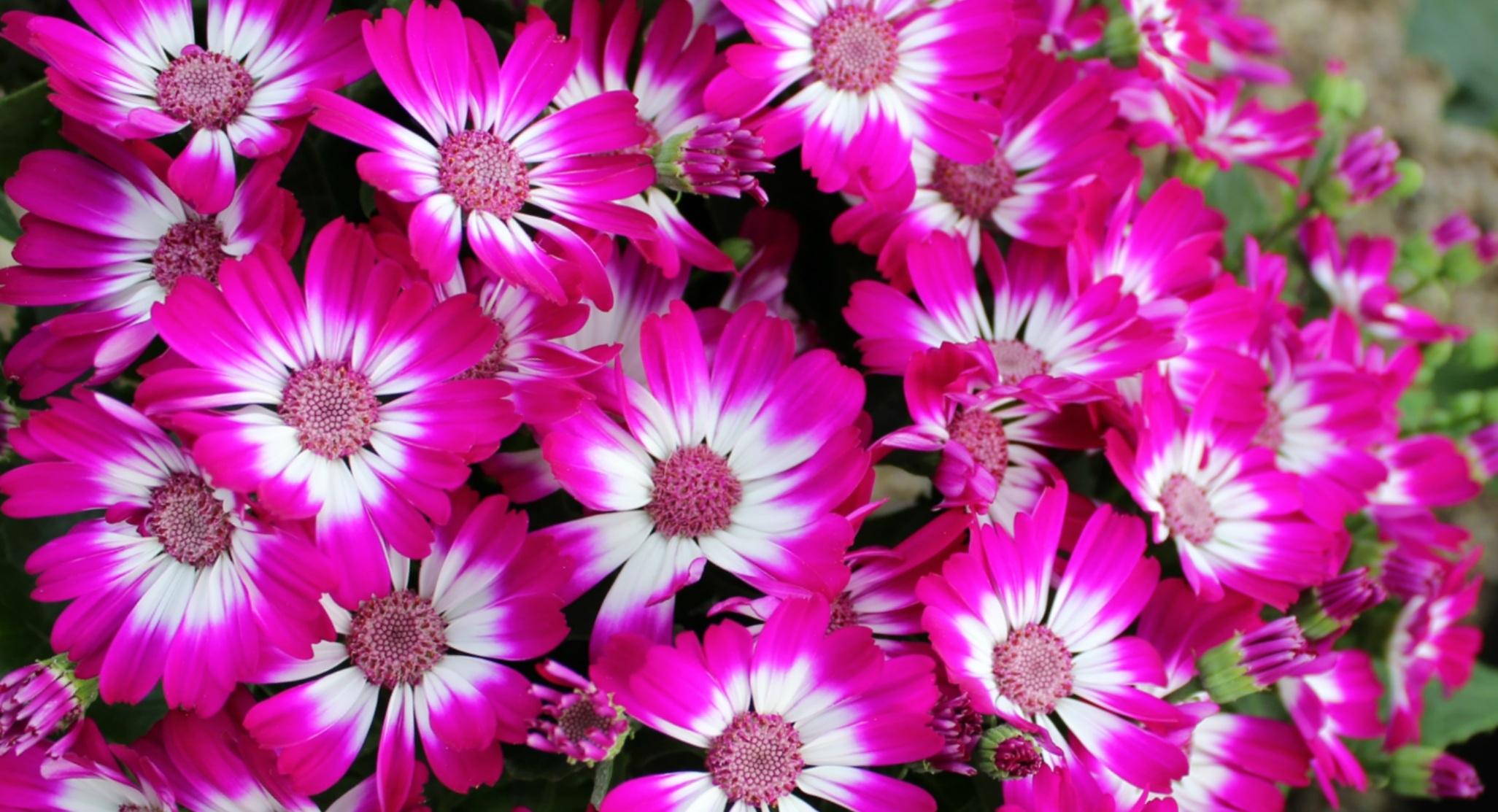 Images Gratuites : fleur, pétale, Couleur, Naturel, Frais, botanique, flore, Fleur sauvage ...