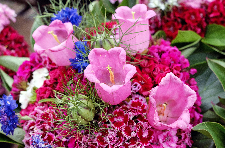 Free Images : blossom, petal, color, pink, flora, bouquet of flowers ...