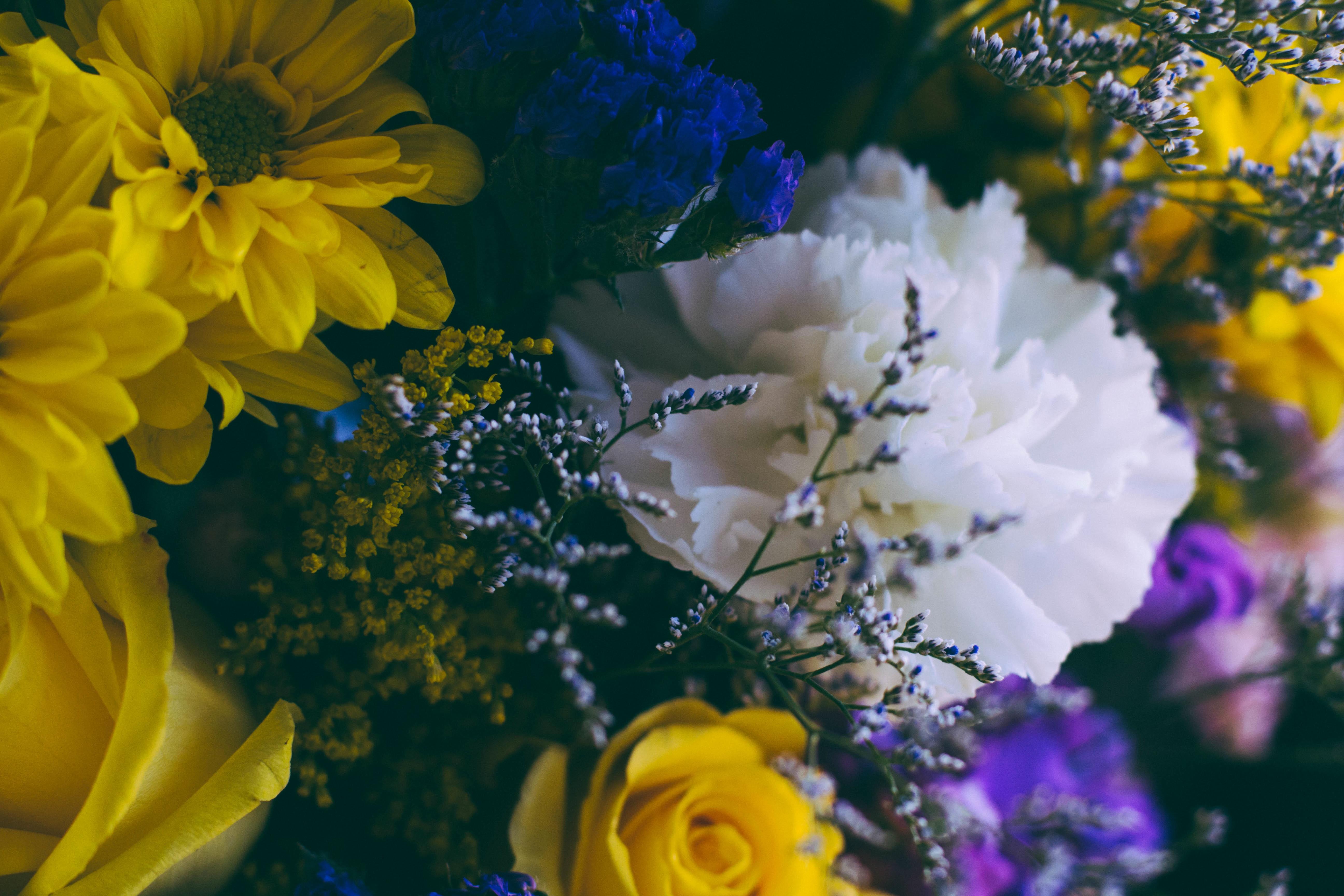 Pianta Dai Fiori Gialli.Immagini Belle Fiorire Fiore Petalo Mazzo Decorazione