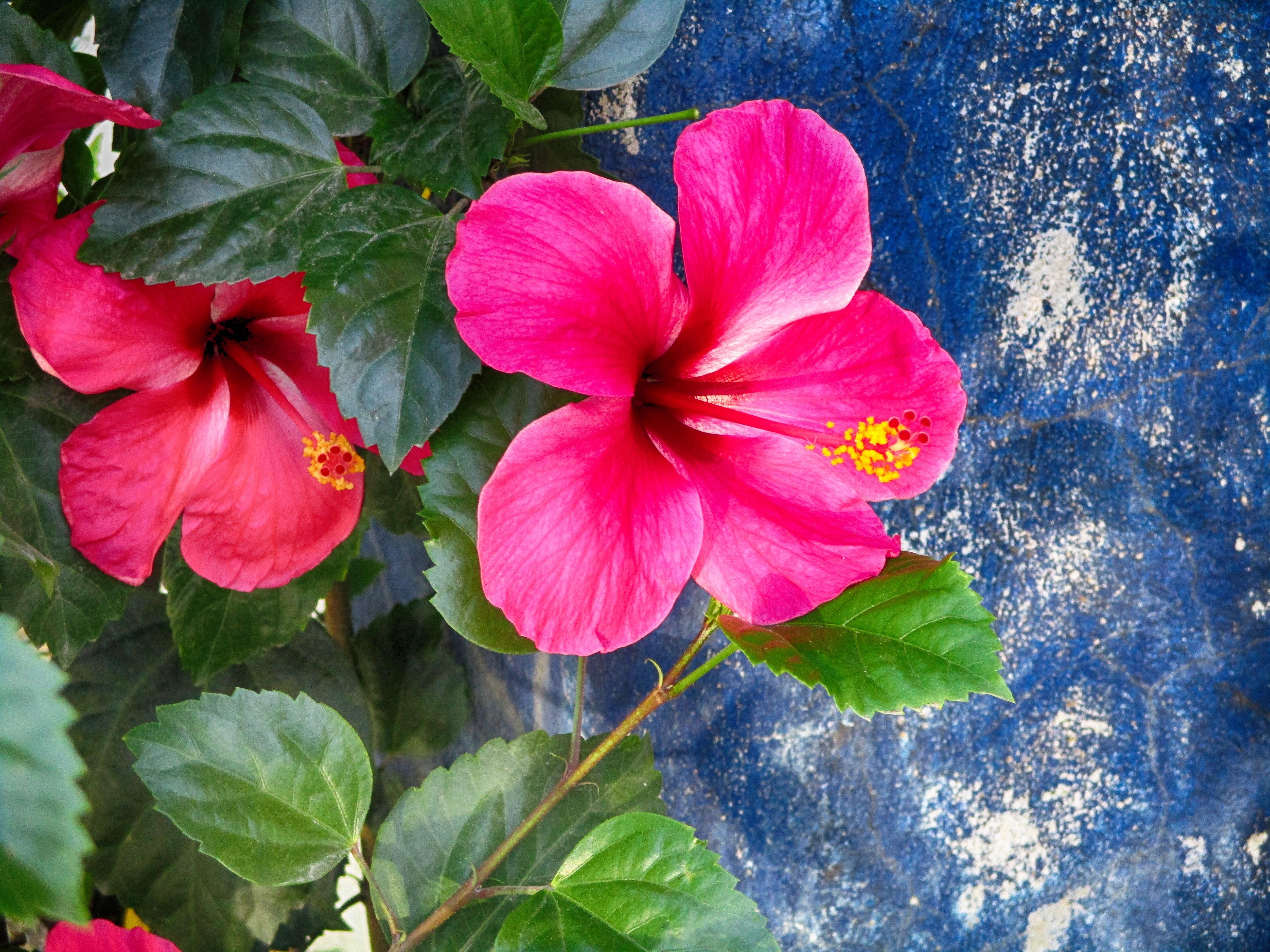 Fotoğraf Taçyaprağı Yeşil Kırmızı Botanik Bahçe Bitki örtüsü