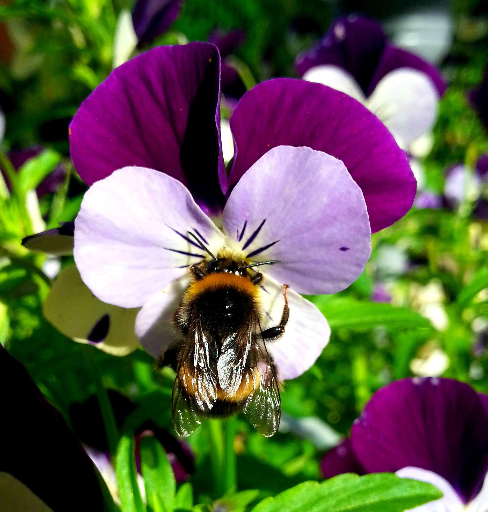 Какой цветок лучше расплетается фото и названия что