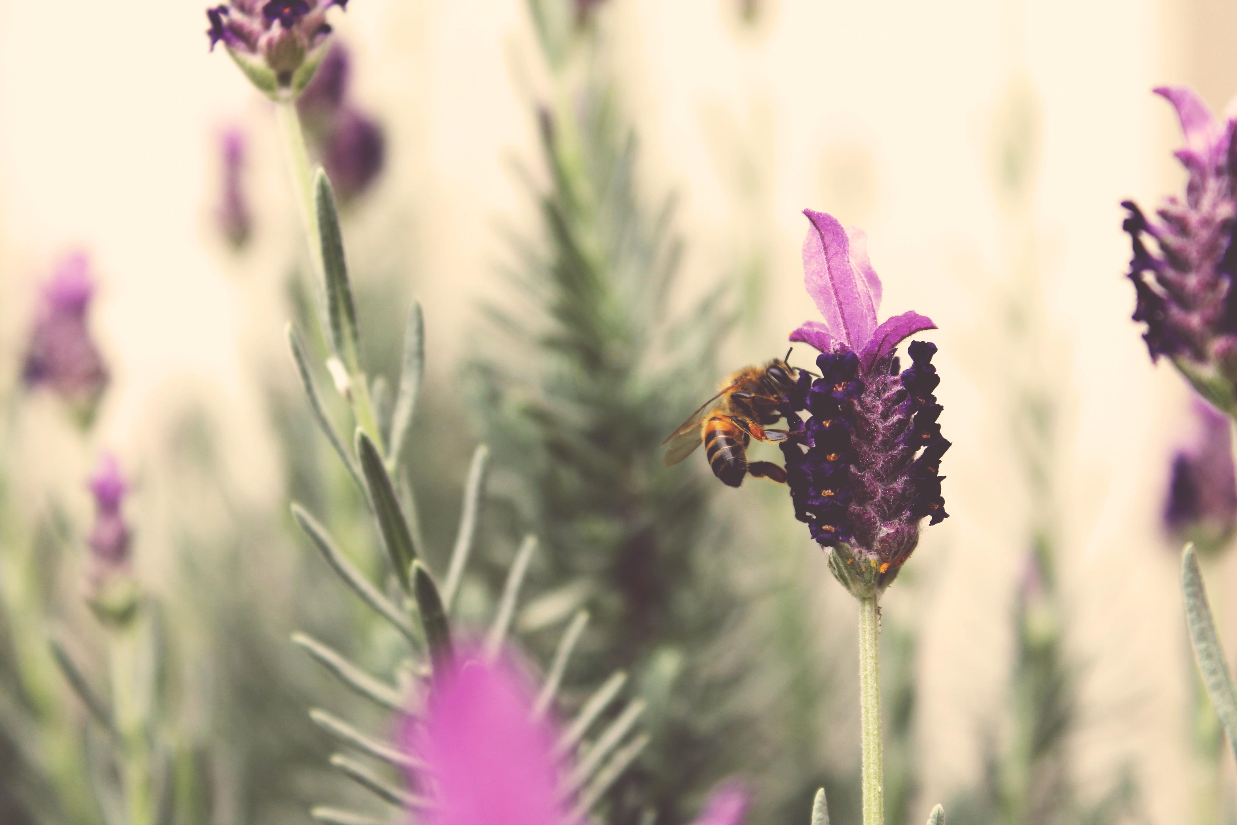 hình ảnh : thực vật, Cánh hoa, Côn trùng, Thực vật học, Hệ ...