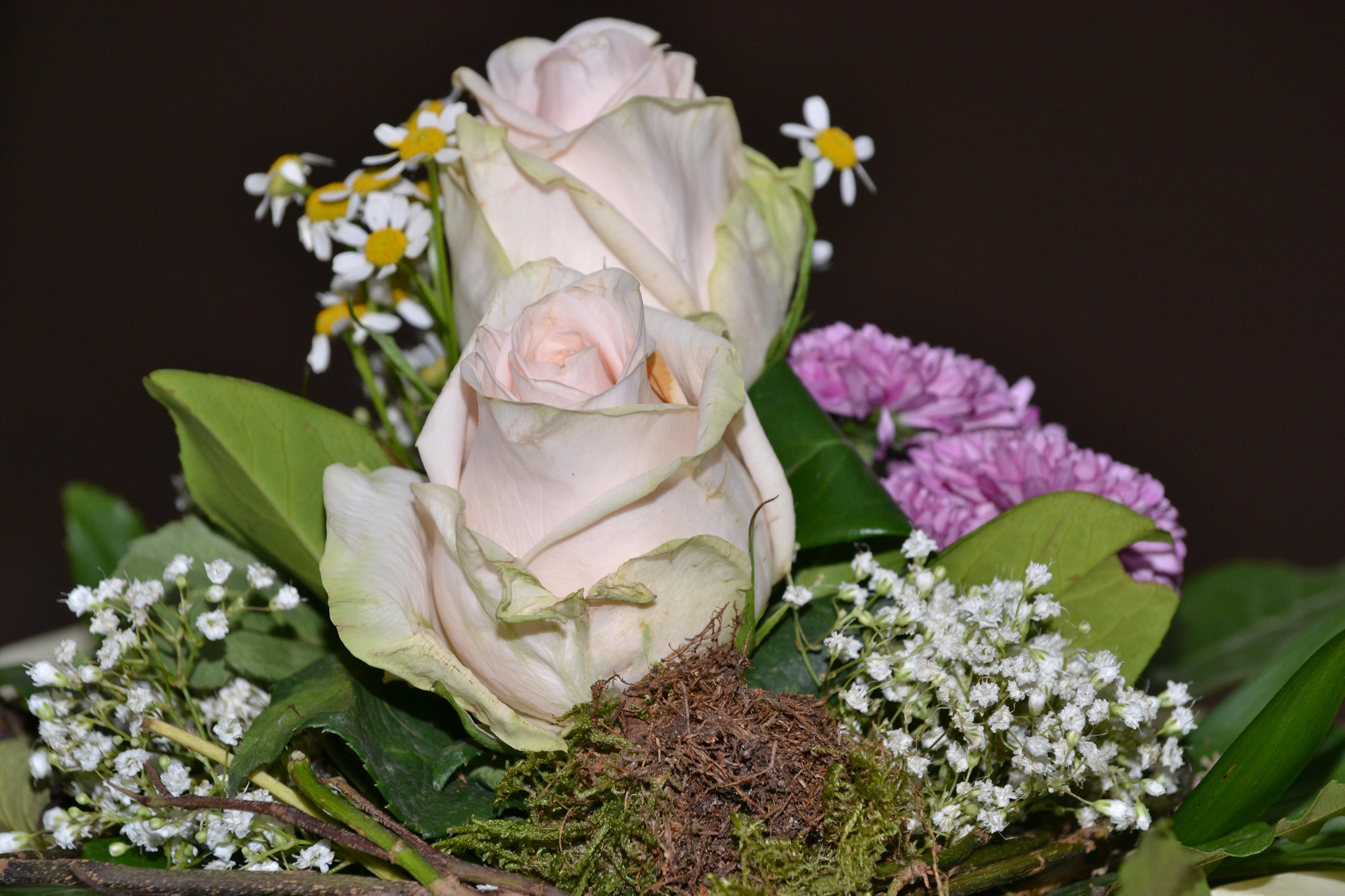 Gambar Mekar Menanam Daun Bunga Cinta Vas Musim Semi Percintaan Berwarna Merah Muda Flora Bunga Bunga Mawar Merah Muda Karangan Bunga Budidaya Bunga Fotografi Makro Tanaman Berbunga Mawar Taman Buket Bunga Bunga