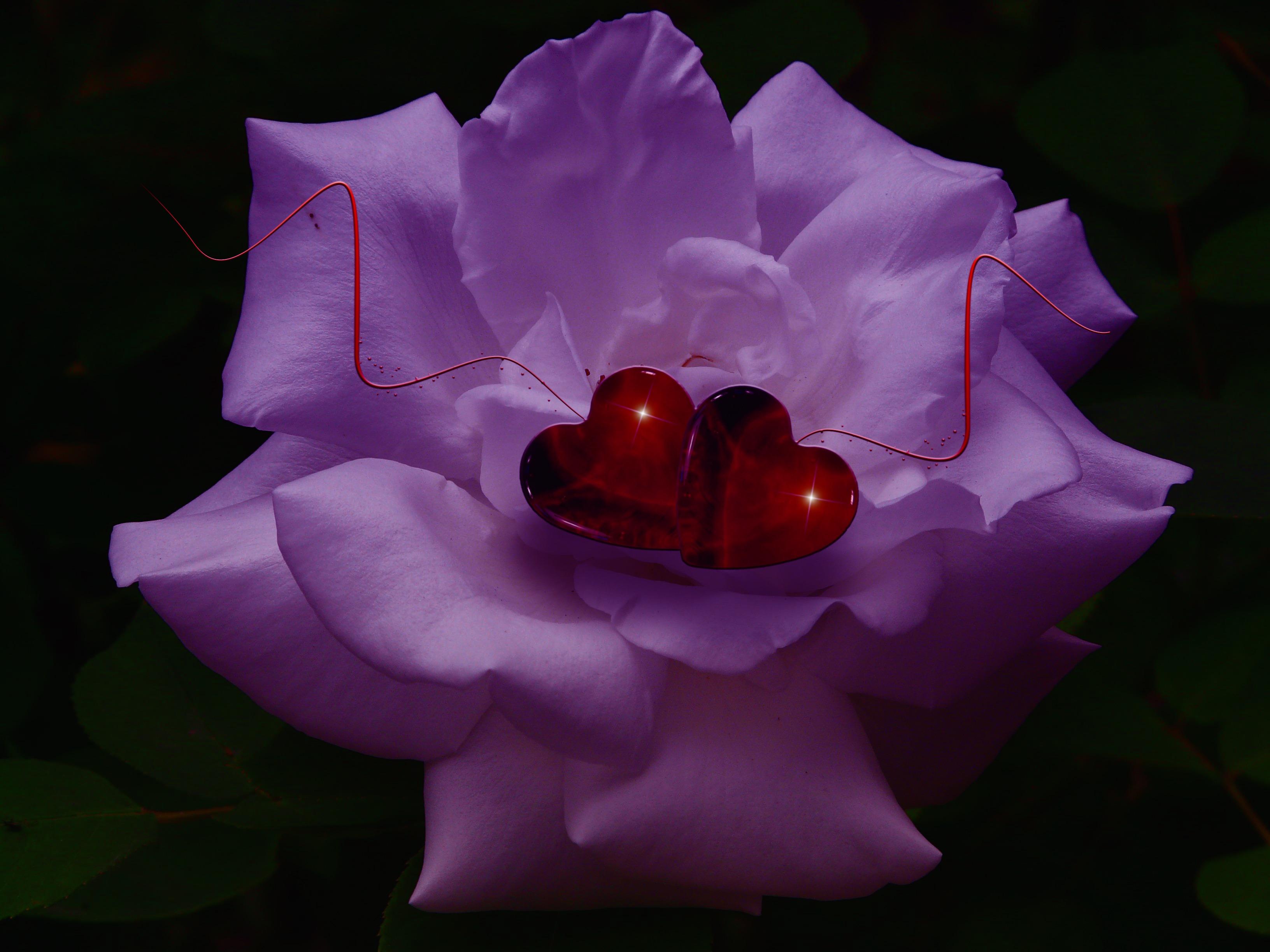 Images gratuites fleur p tale amour c ur d coration - Images coeur gratuites ...