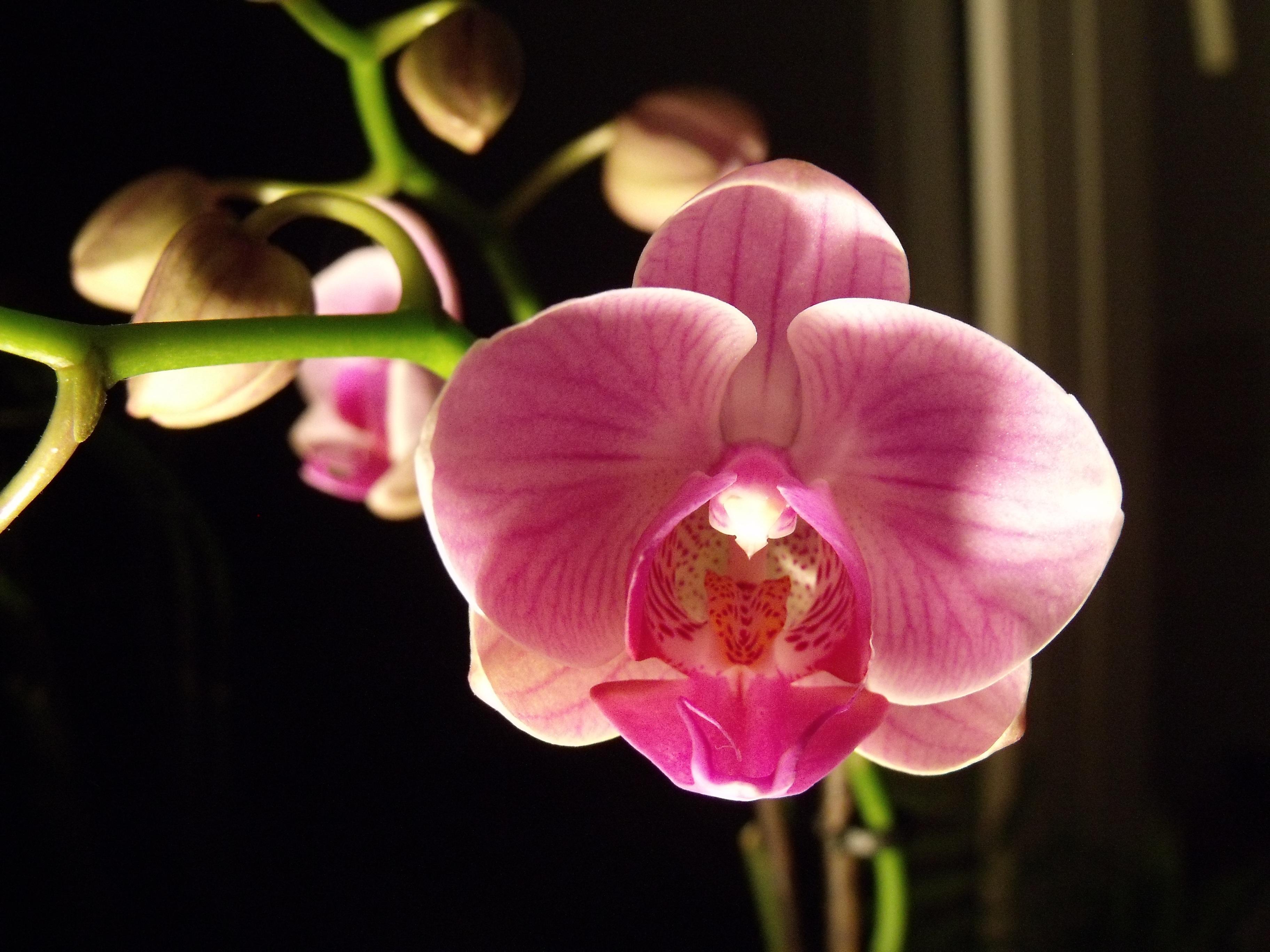 вид орхидея крупным планом фото анкеты