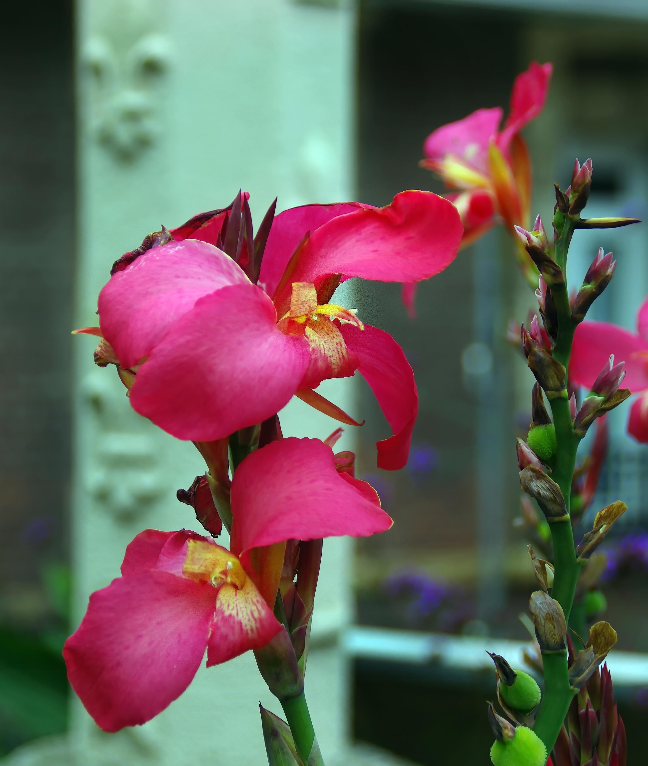 Free Images Blossom Petal Botany Flora Tropical Plant Petals