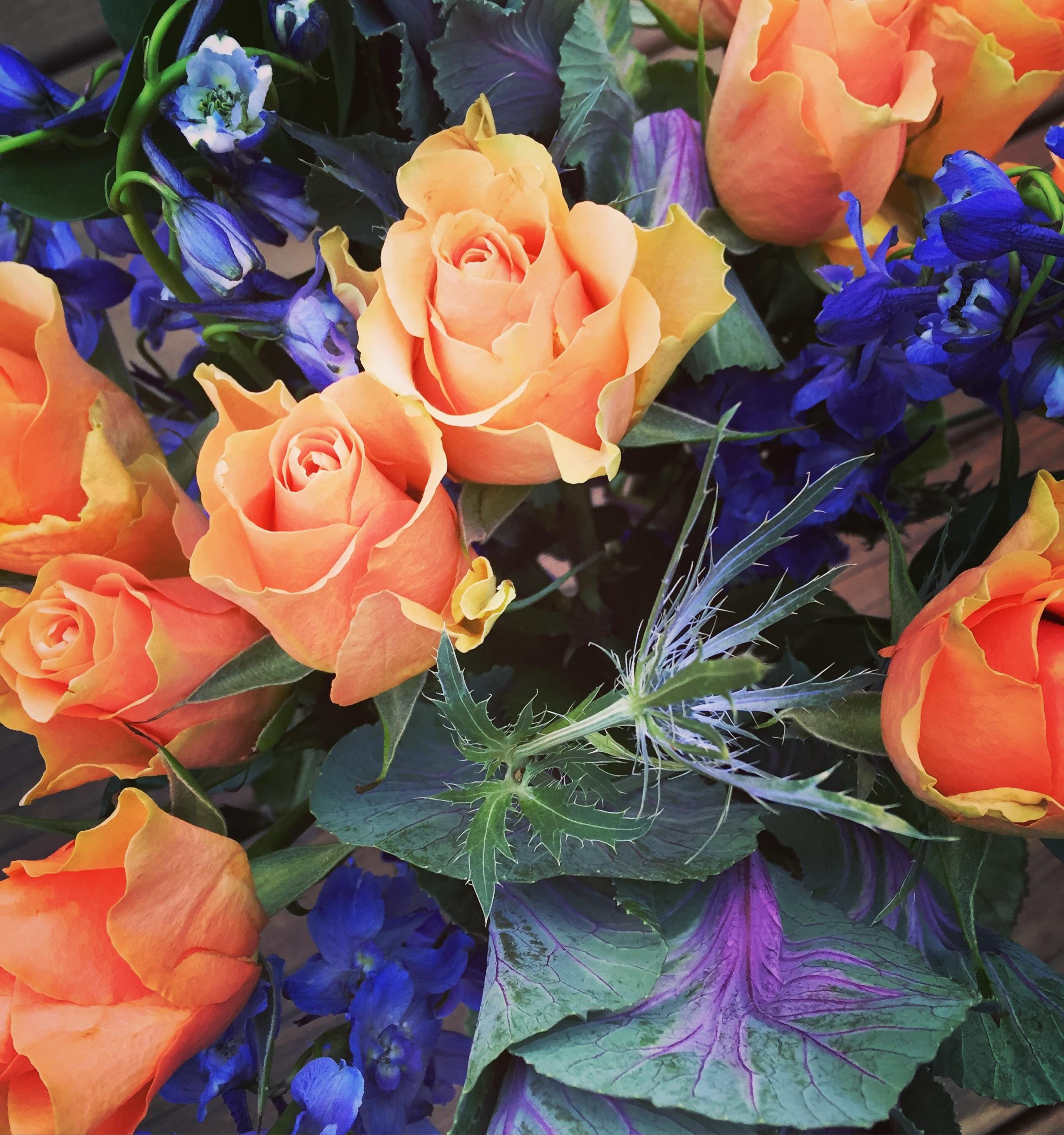 images gratuites : fleur, pétale, vert, frais, romance, flore, des