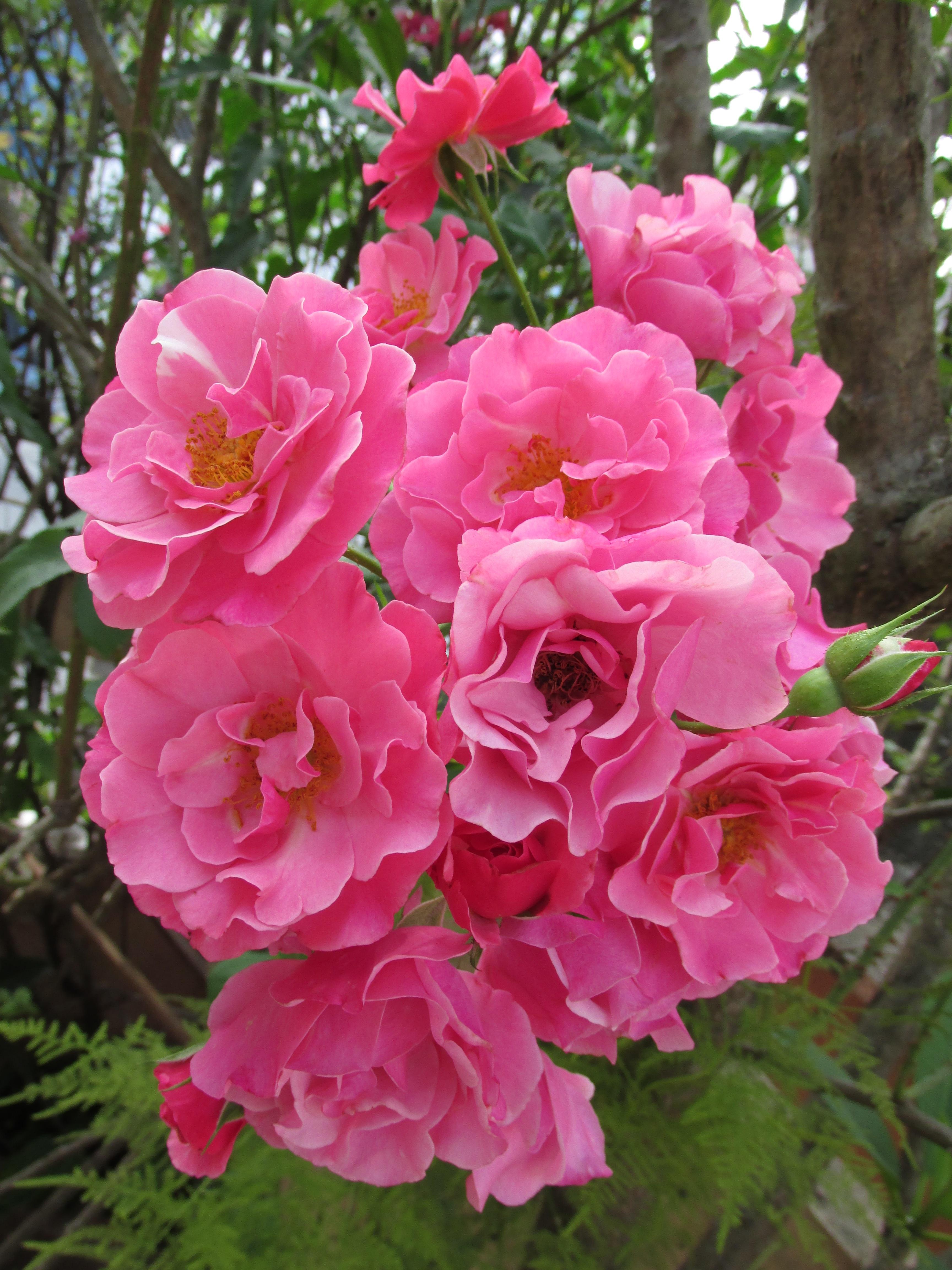 Free fotobanka kv t okv tn l stek jaro zelen - Fleurs roses de printemps ...