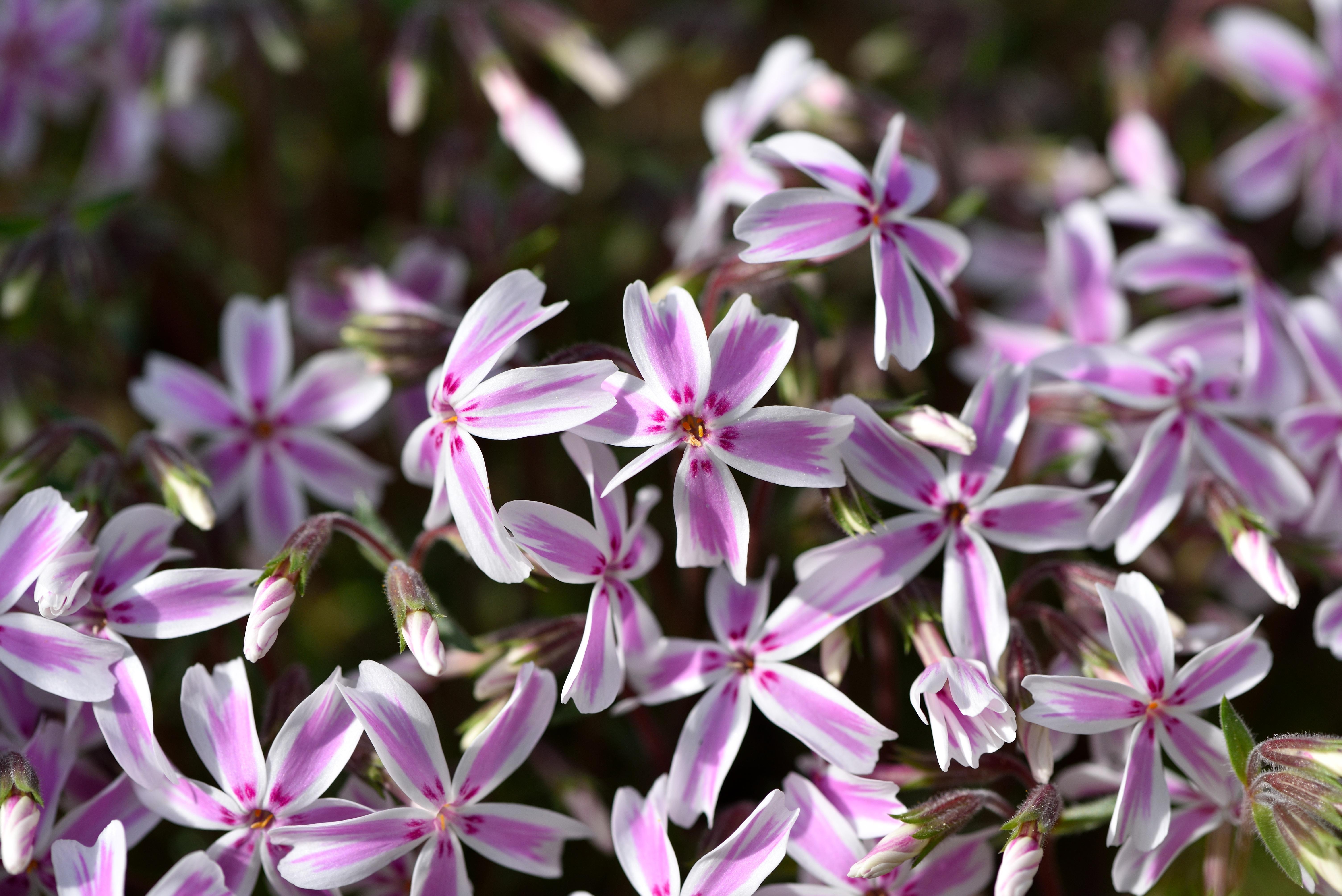 Free Images Blossom Petal Spring Botany Close Flora