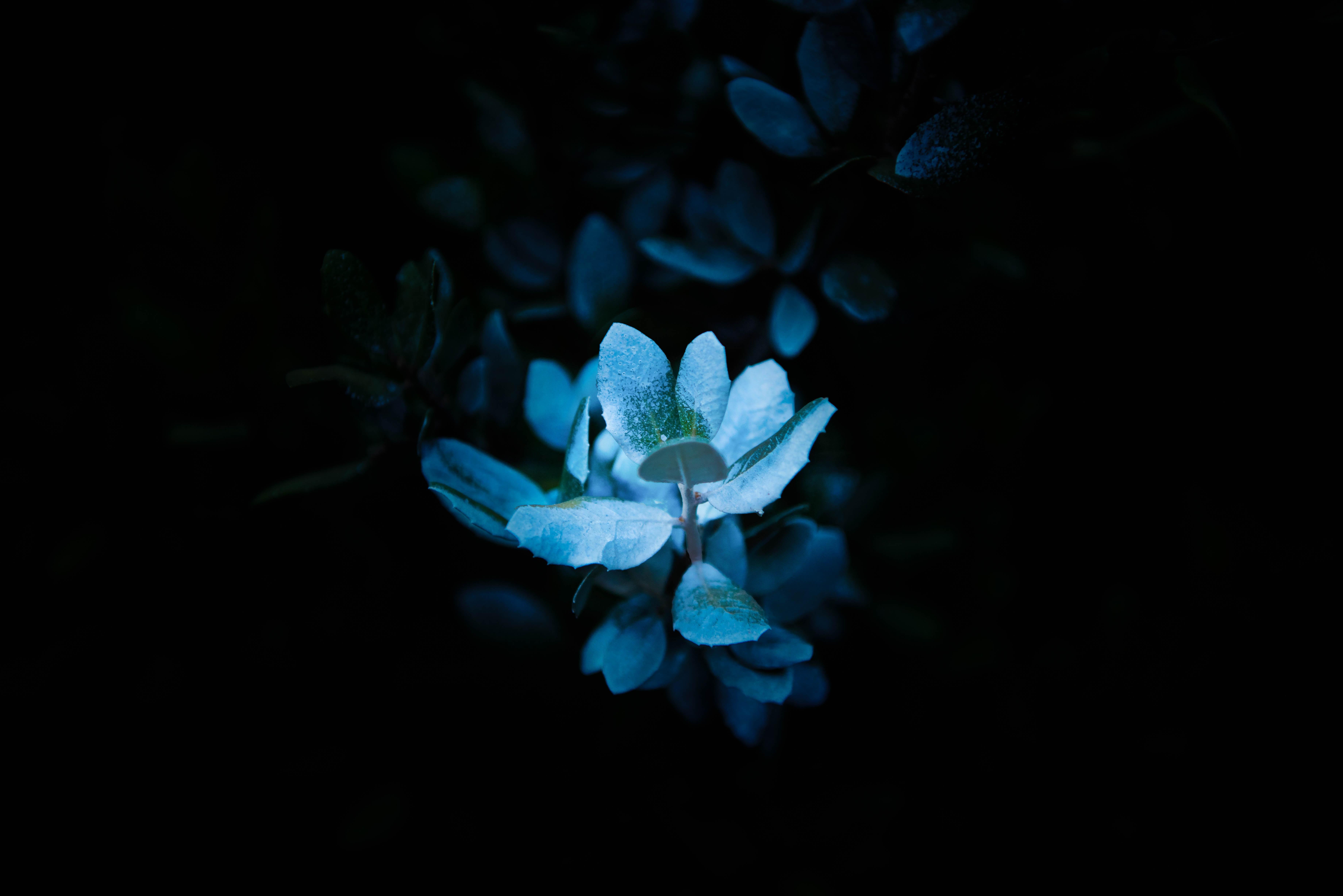 ilmaisia kuvia kukka kasvi ter228lehti kev228t pimeys