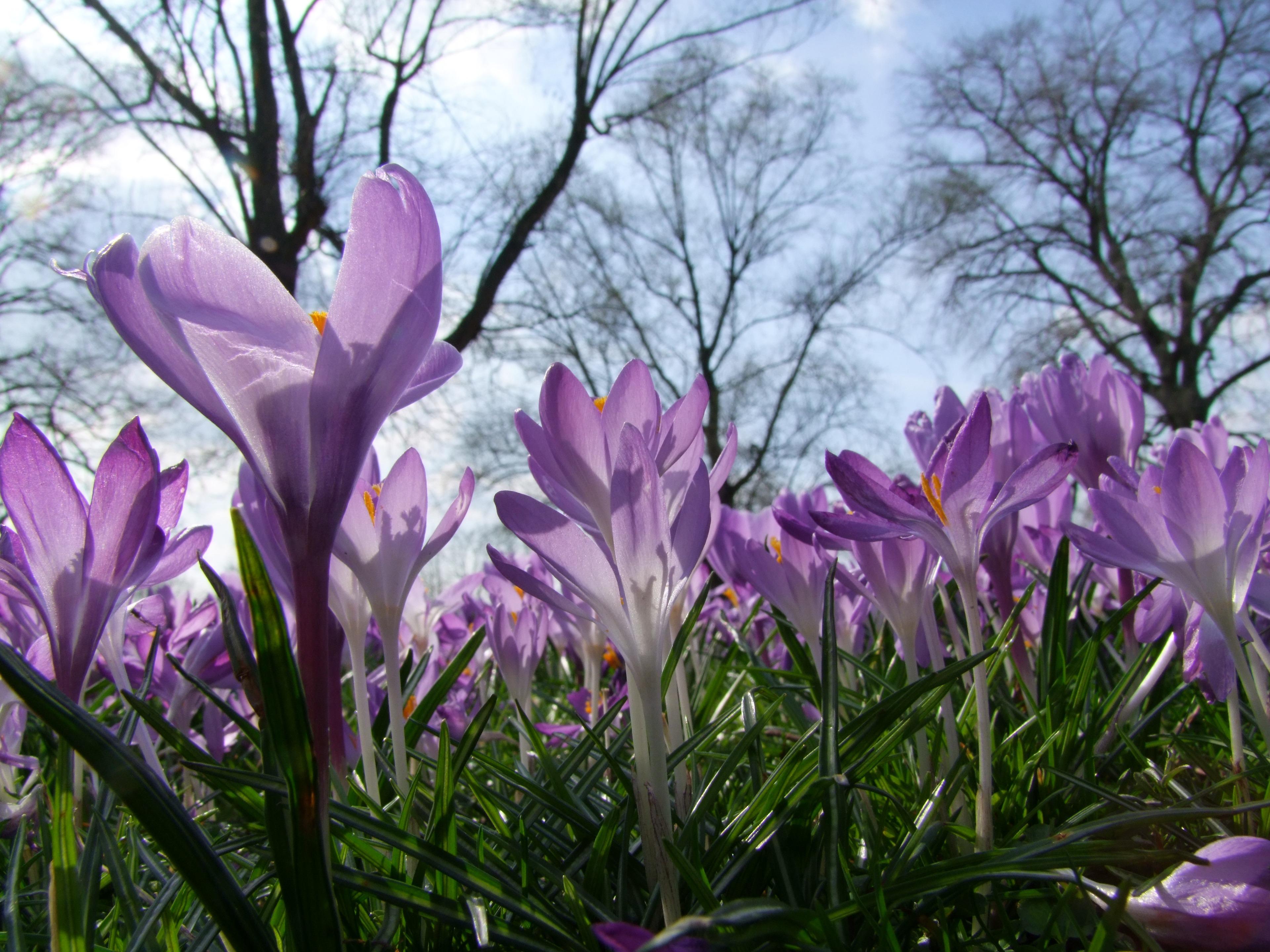 Free Images Blossom Petal Spring Park Botany Flora