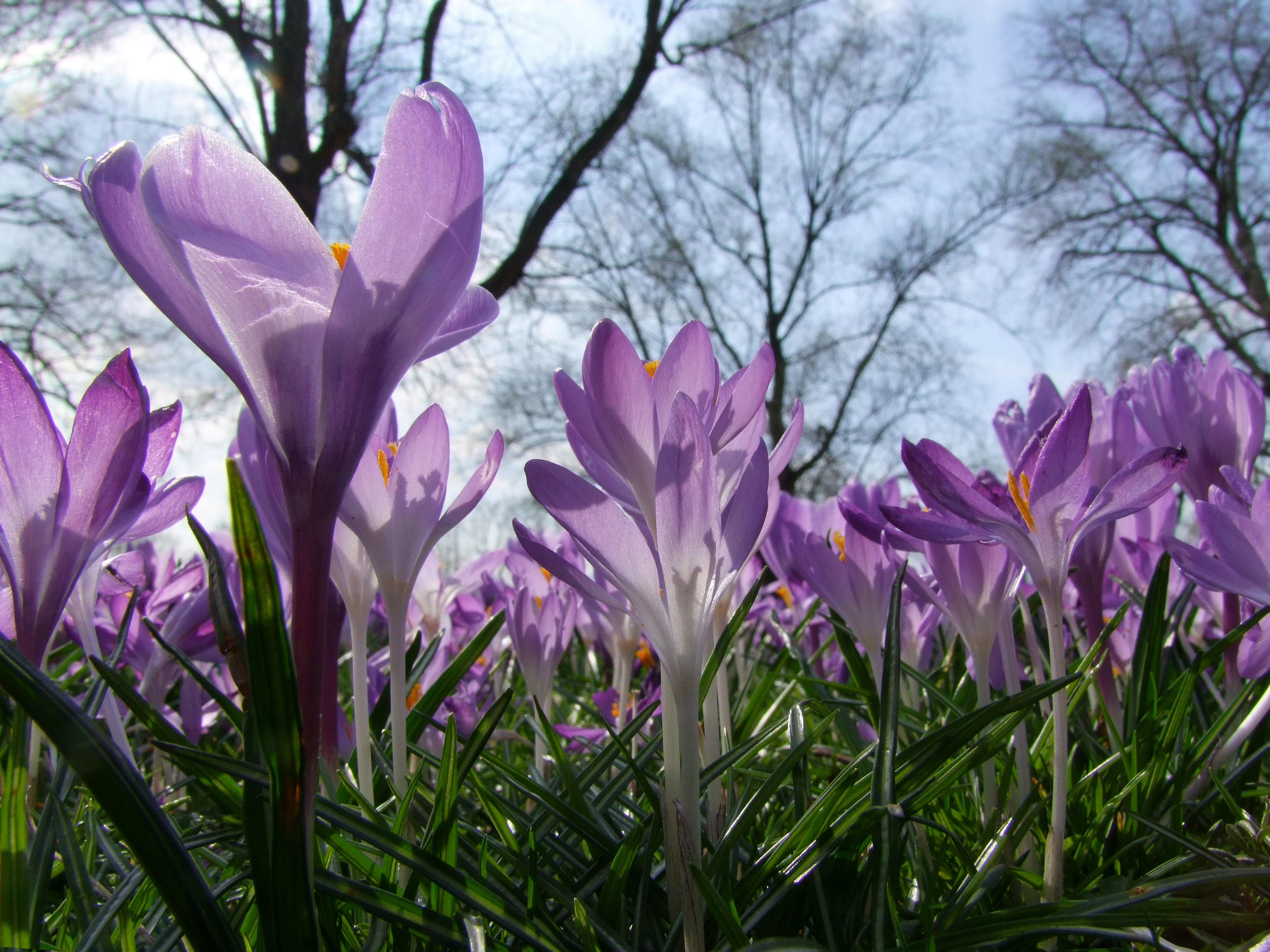 Gambar Mekar Menanam Daun Bunga Musim Semi Taman Botani
