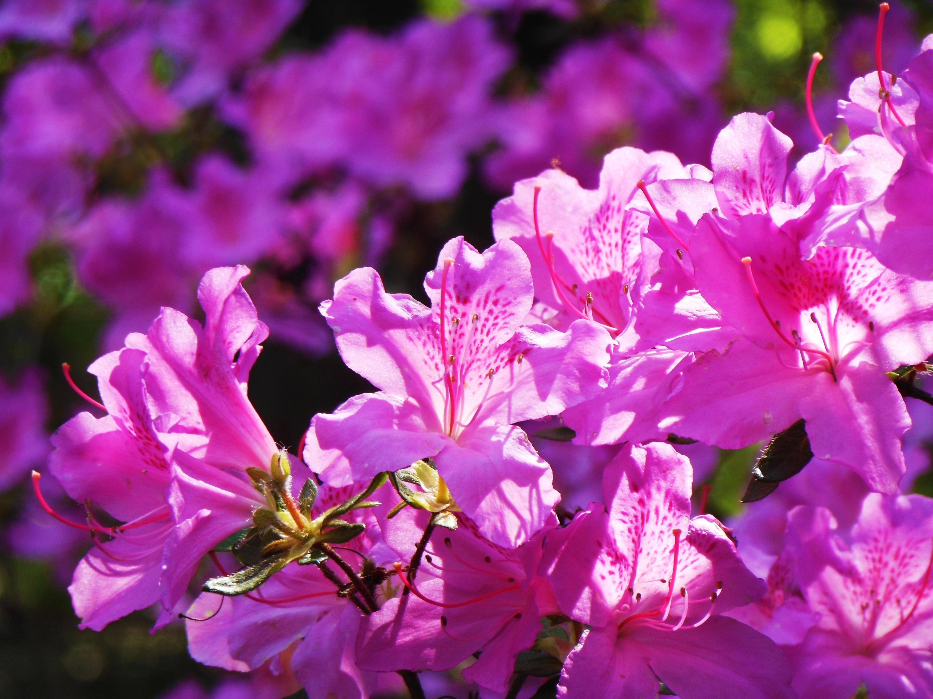 Розовые розы фото букеты красивые с бриллиантами определить реальный