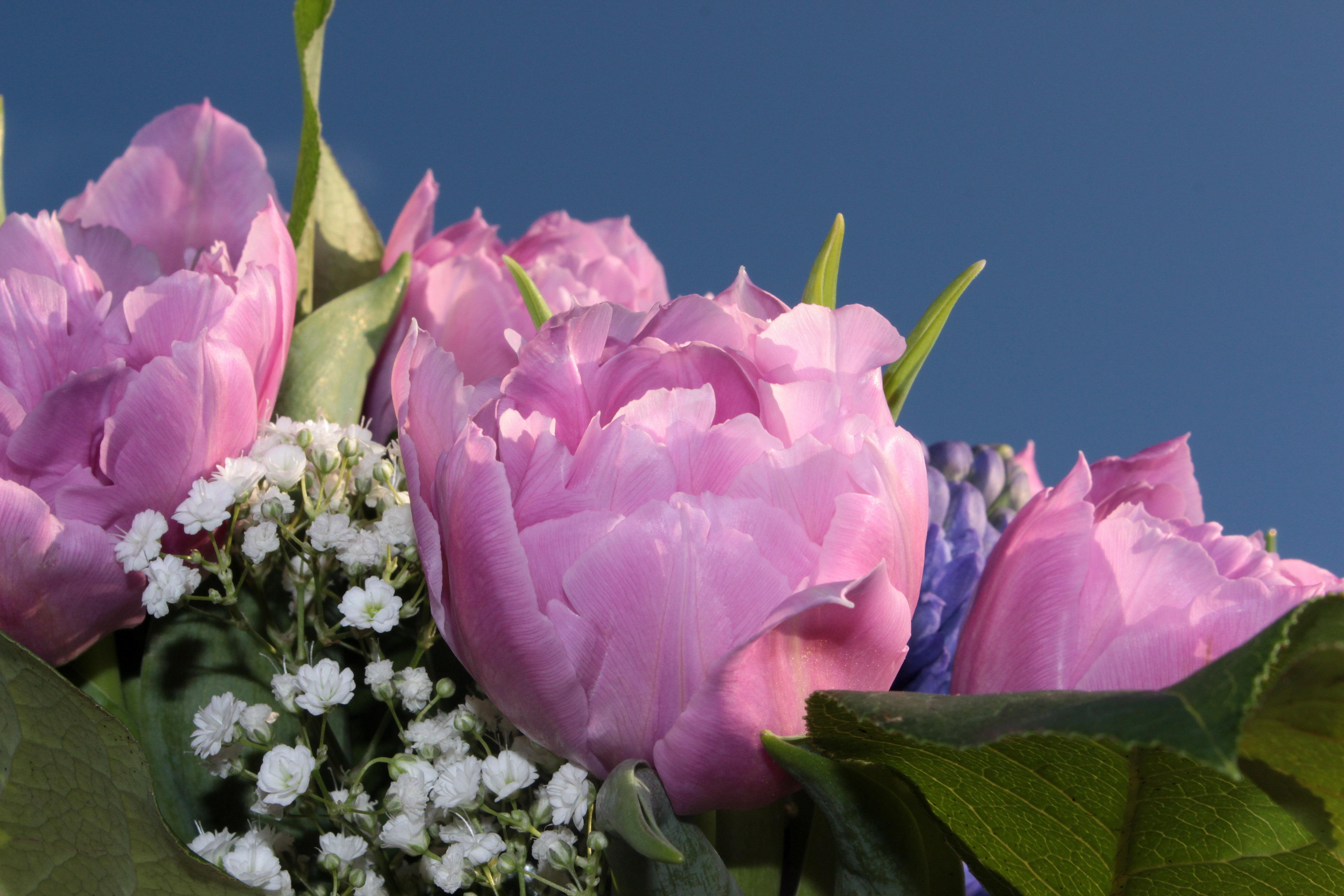 Fotos gratis flor p talo tulip n ramo rosado flora - Cortar hierba alta ...