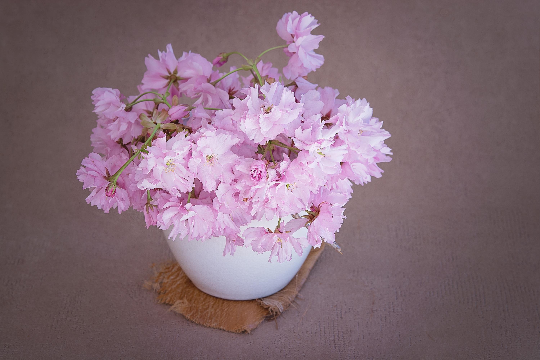Free Images : petal, vase, decoration, spring, close, still life ...
