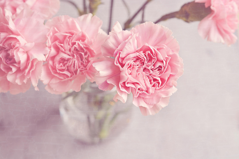 Free images blossom petal vase romantic pink close still blossom plant flower petal vase romantic pink close still life flowers carnation beautiful tender floristry peony mightylinksfo