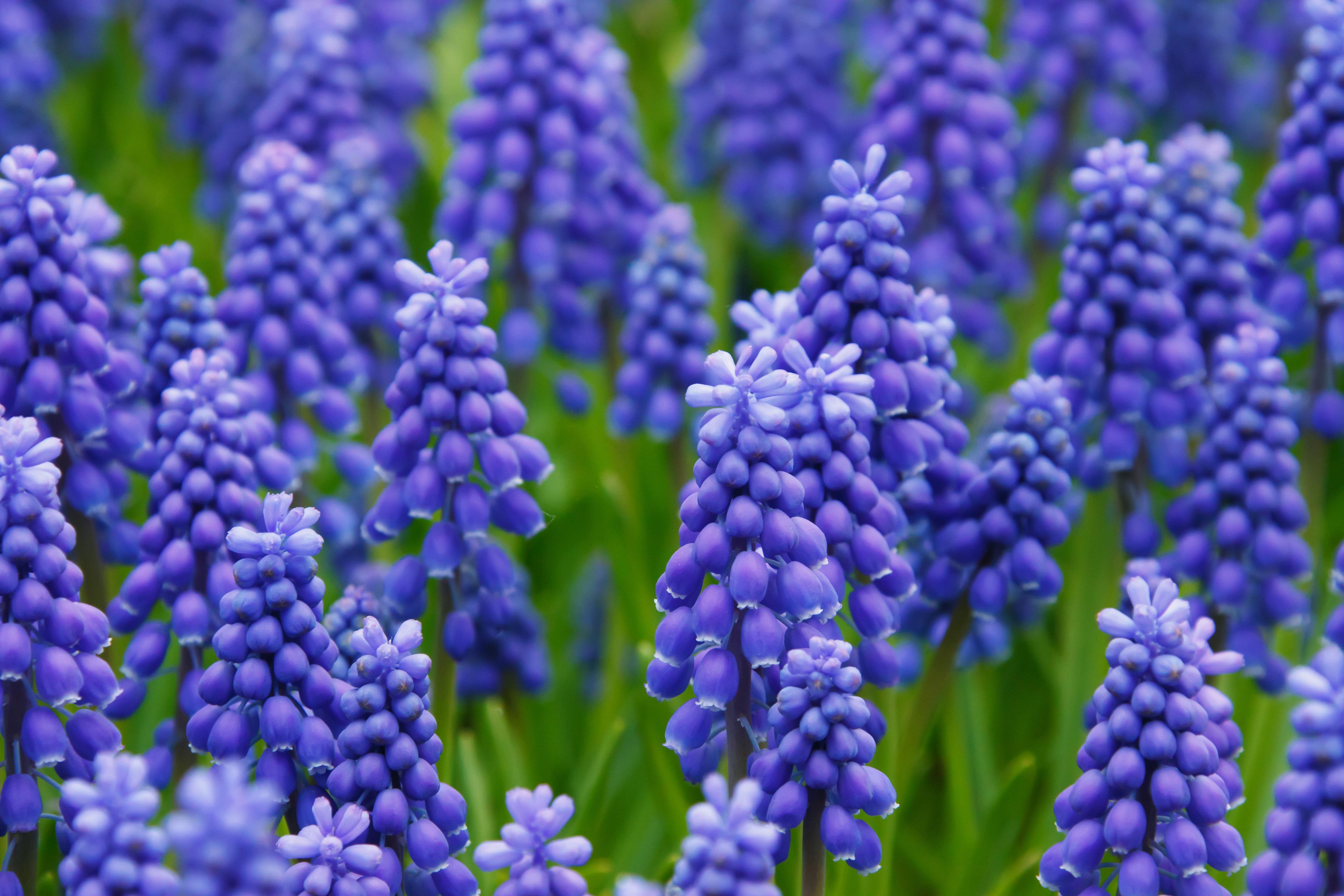 Free Images Blossom Flower Purple Bloom Green Fresh Botany