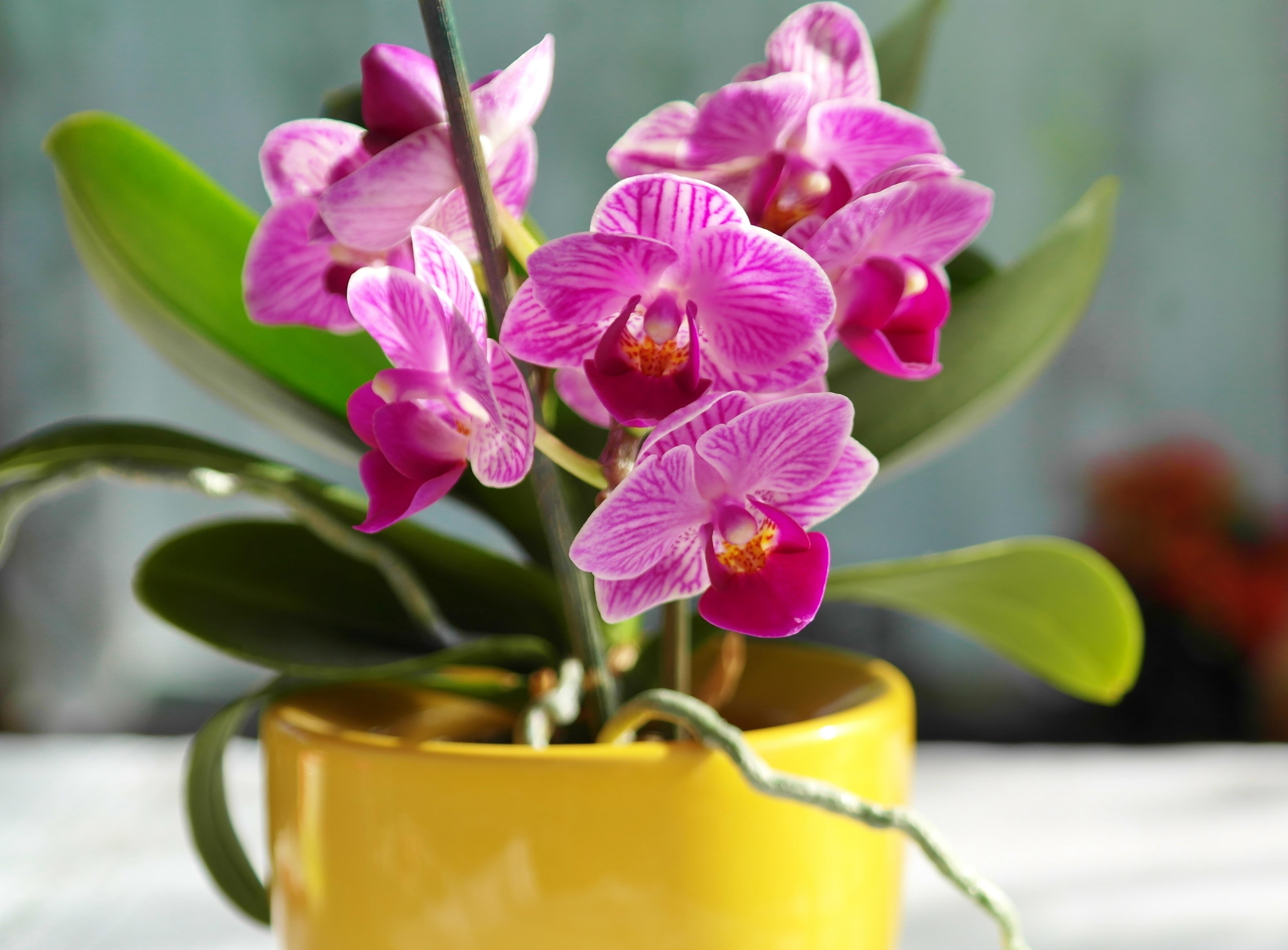 орхидея и уход за ней в картинках старую коробку