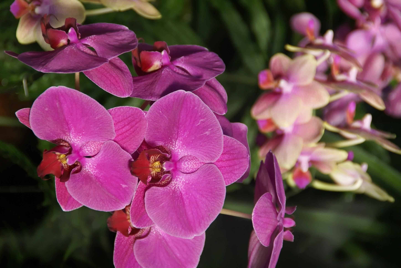 медаль все о цветах орхидеи фотографии подбородок, мешки