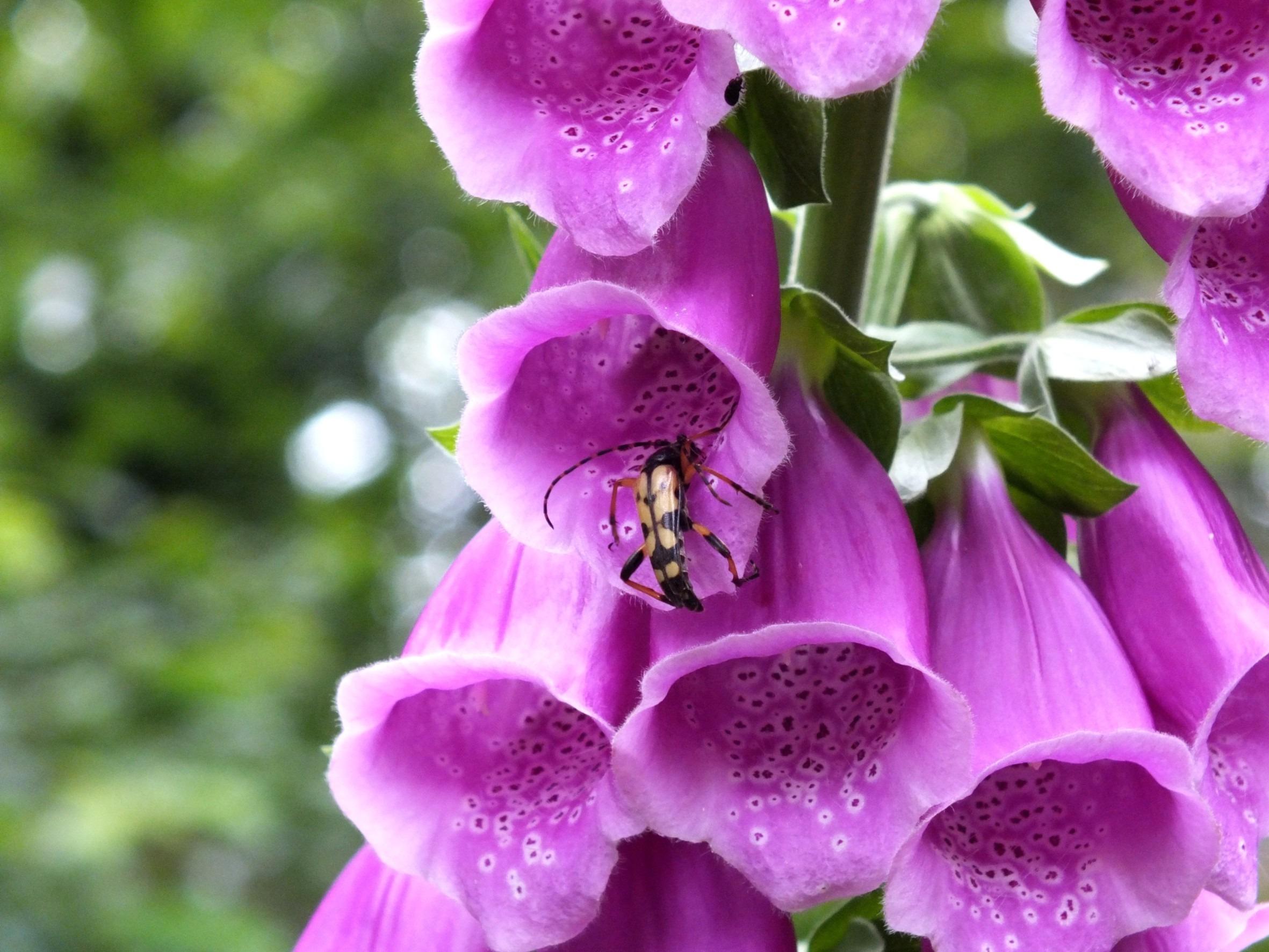 images gratuites : fleur, violet, pétale, floraison, botanique