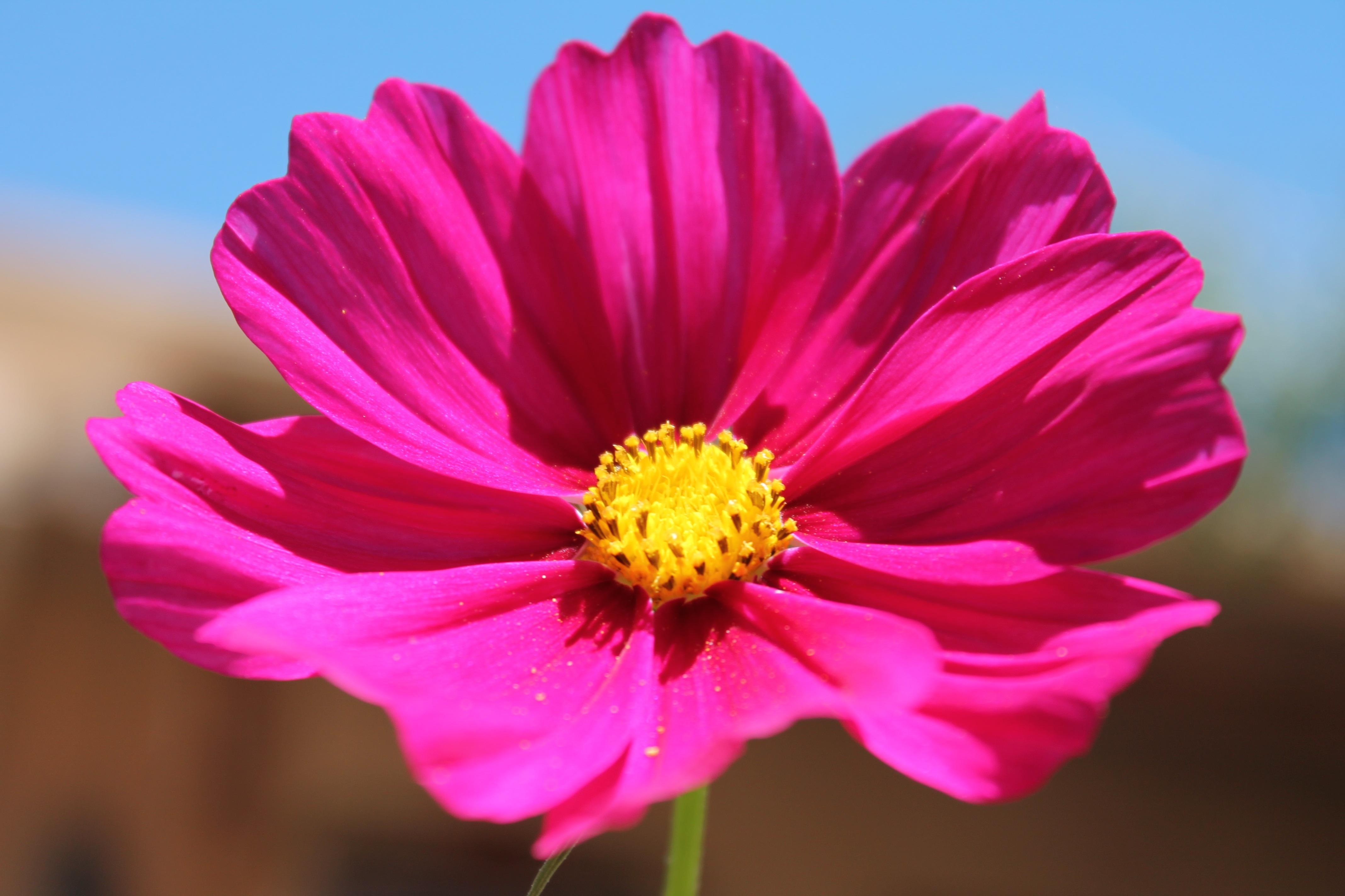 Free Images : blossom, petal, bloom, floral, spring, natural, fresh ...