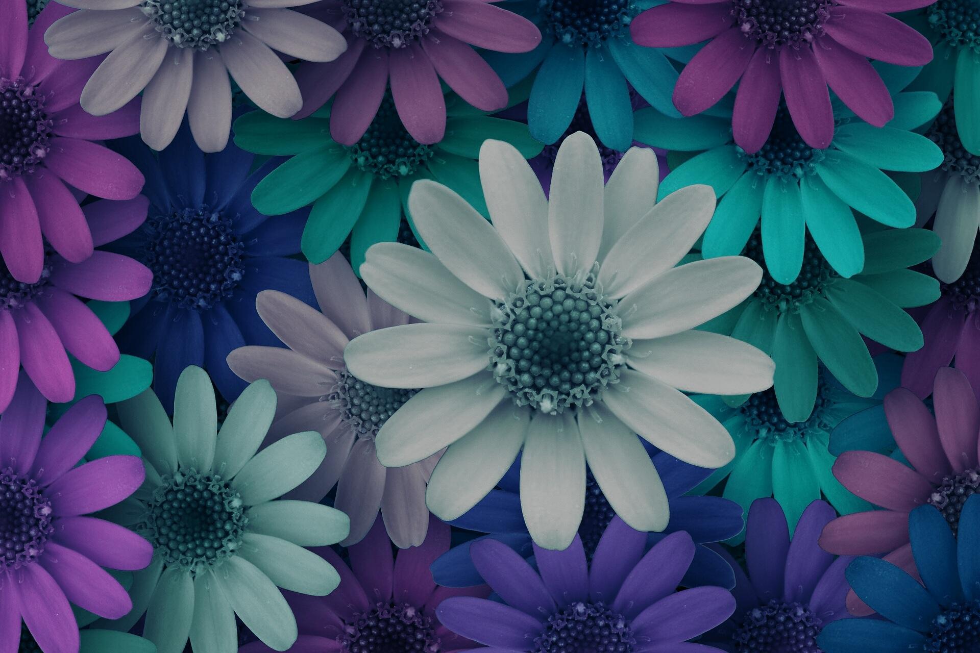Gambar Mekar Menanam Ungu Daun Bunga Berkembang Pola Hijau