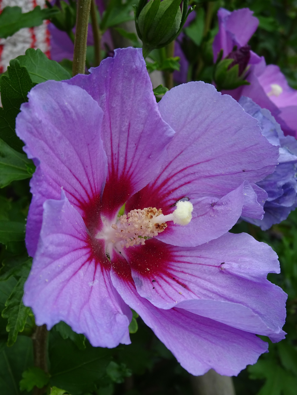 как реагируют цветок похожий на мальву фото производства входных ковров
