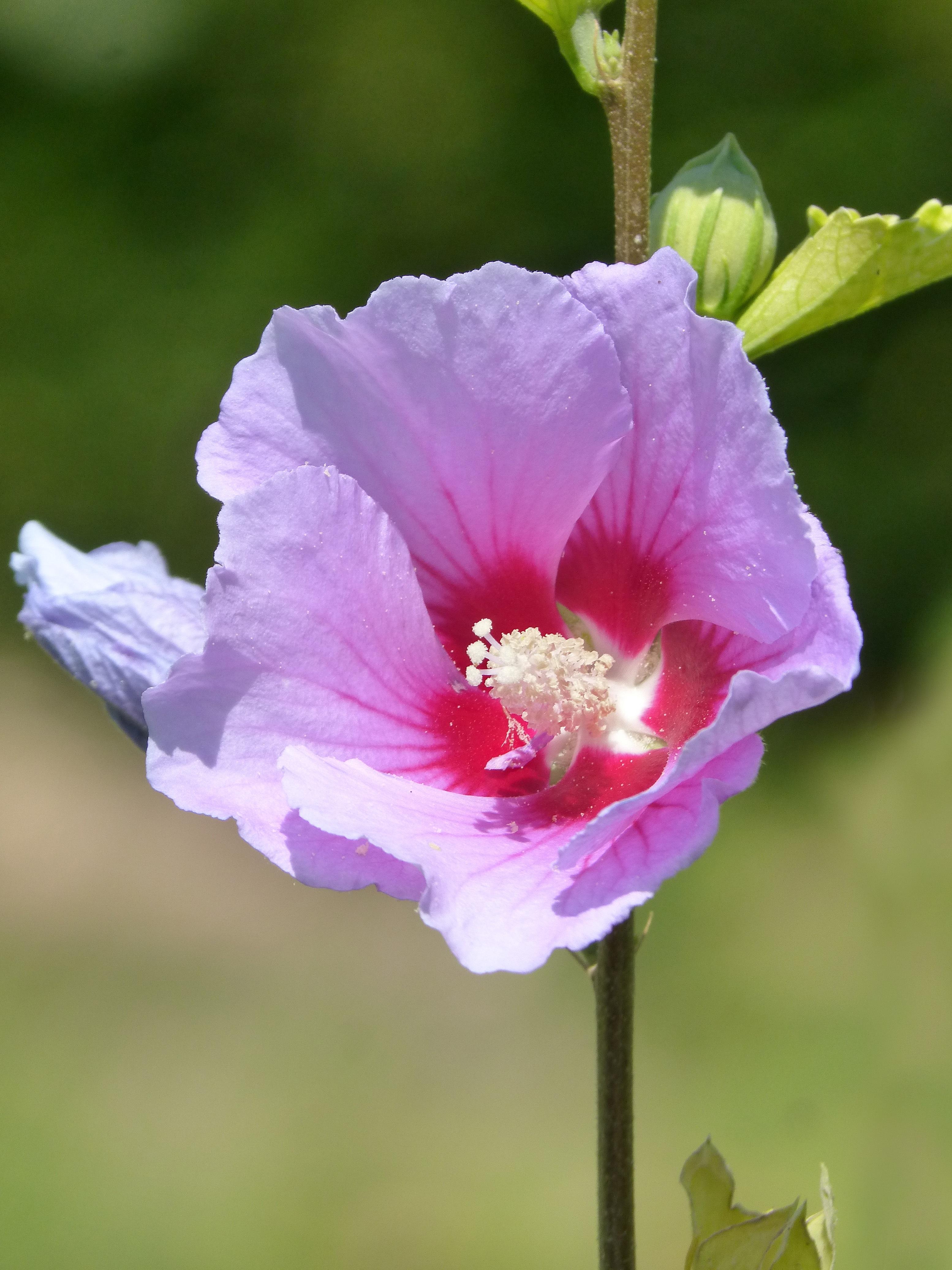 purple hibiscus by adichie understanding nigeria