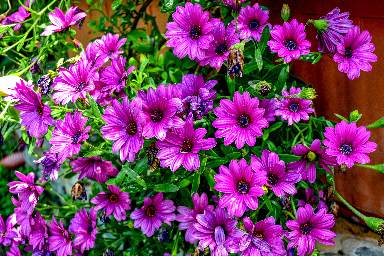 сети садовые цветы с фиолетовыми цветками картинки хотели