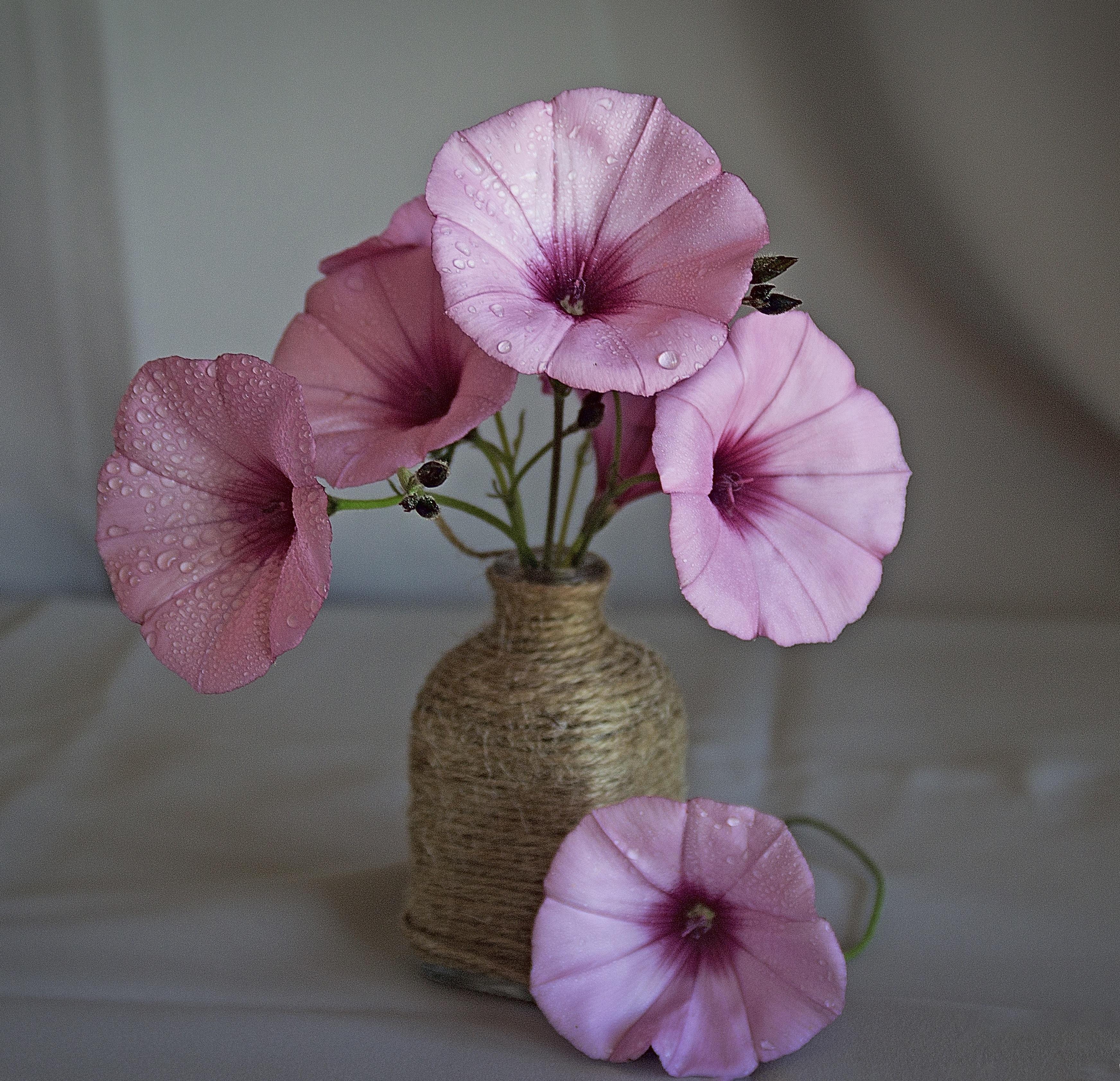 Fotos Gratis Flor P 250 Rpura P 233 Talo Florero Primavera