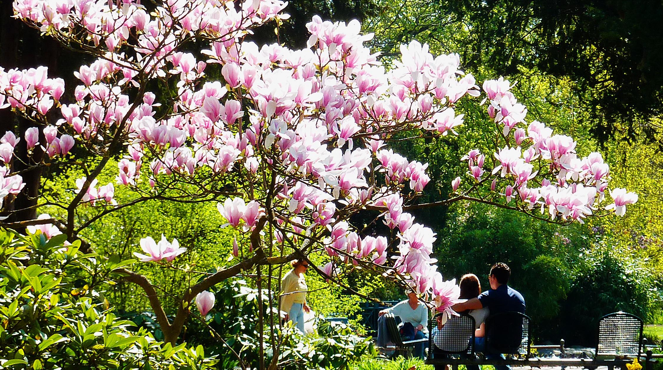 Free Images : flower, spring, color, botany, garden, pink, flora ...