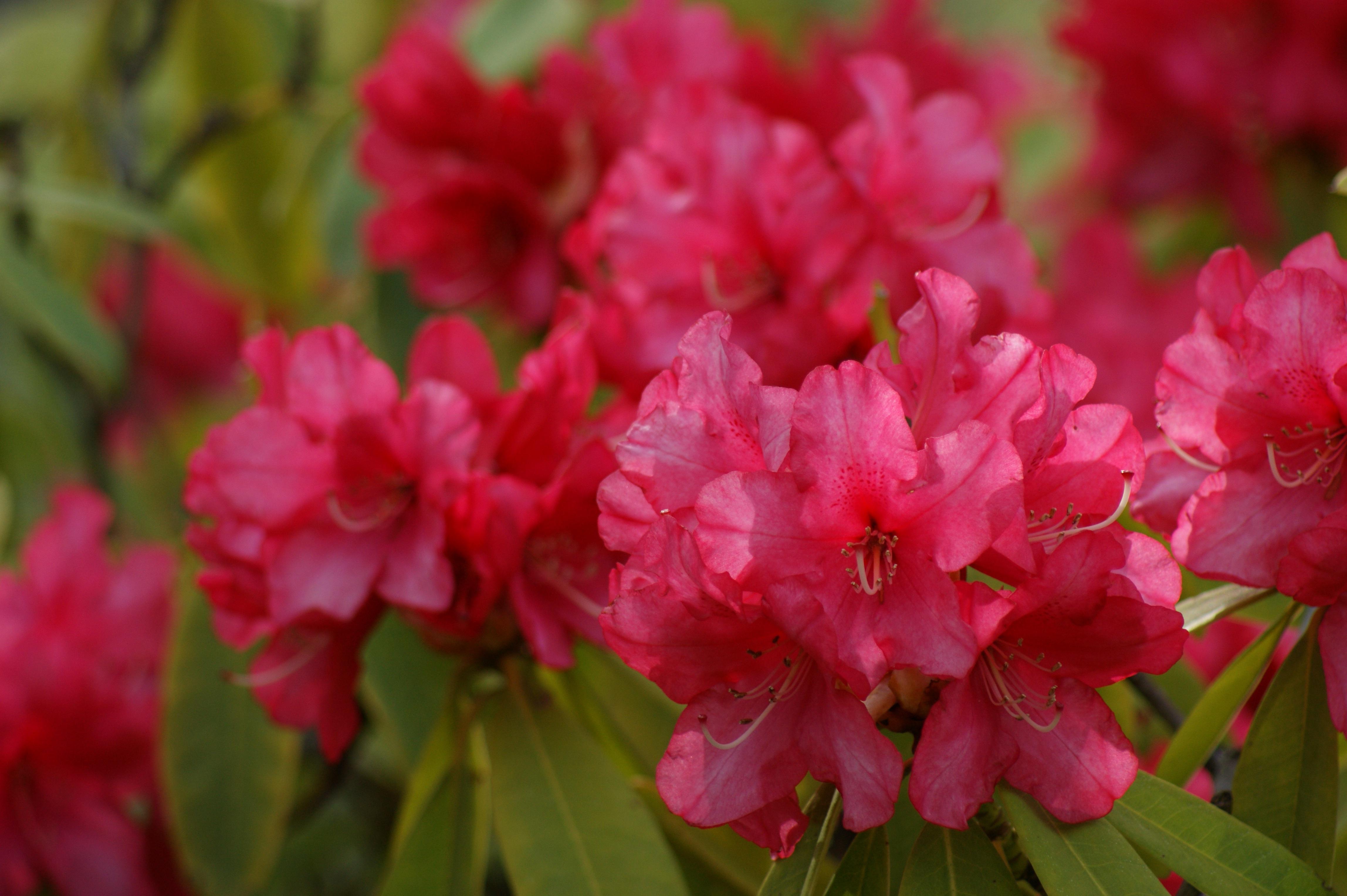Free Images Blossom Flower Summer Floral Spring Botany