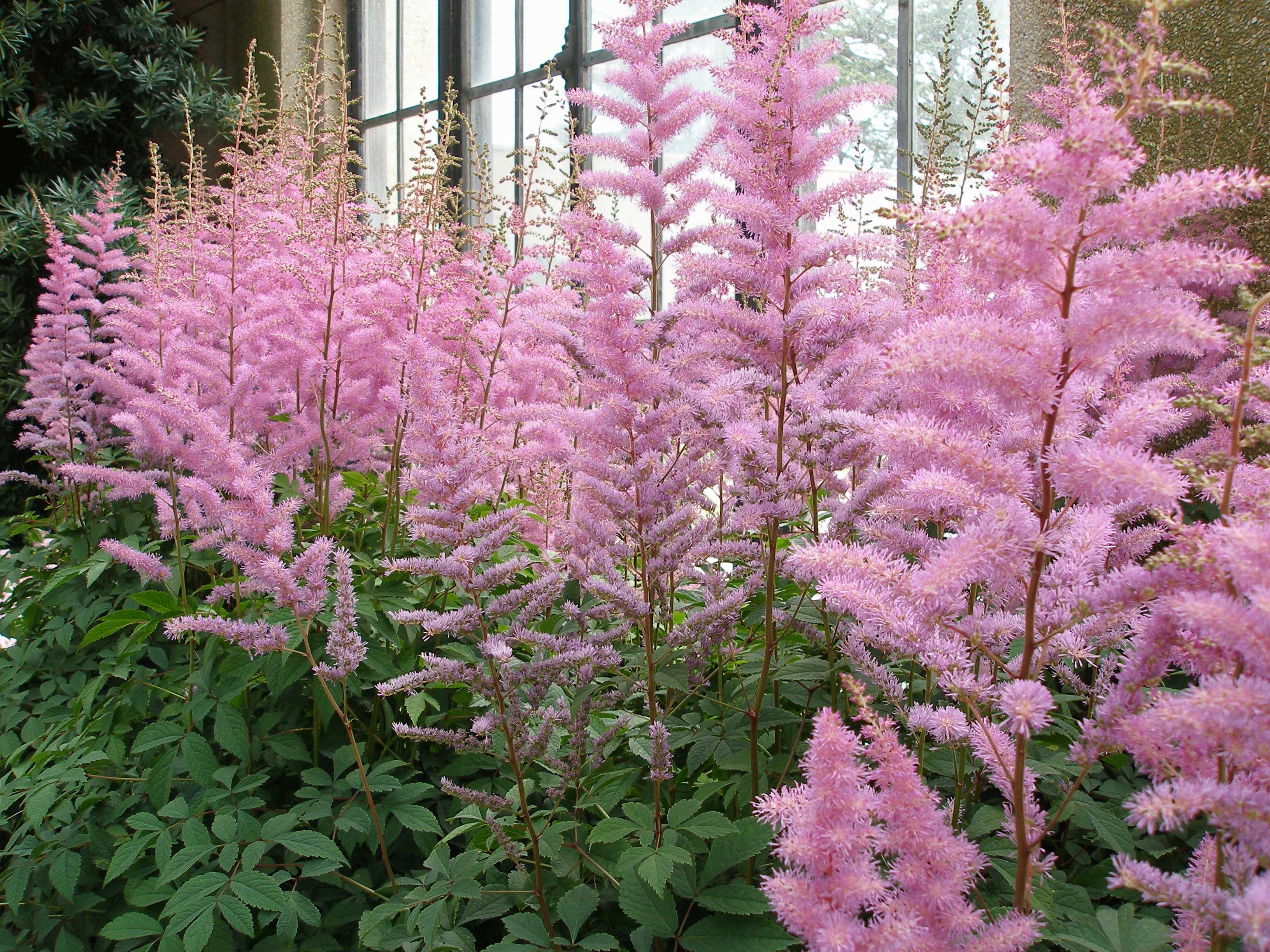 images gratuites : fleur, été, herbe, botanique, épanouissement